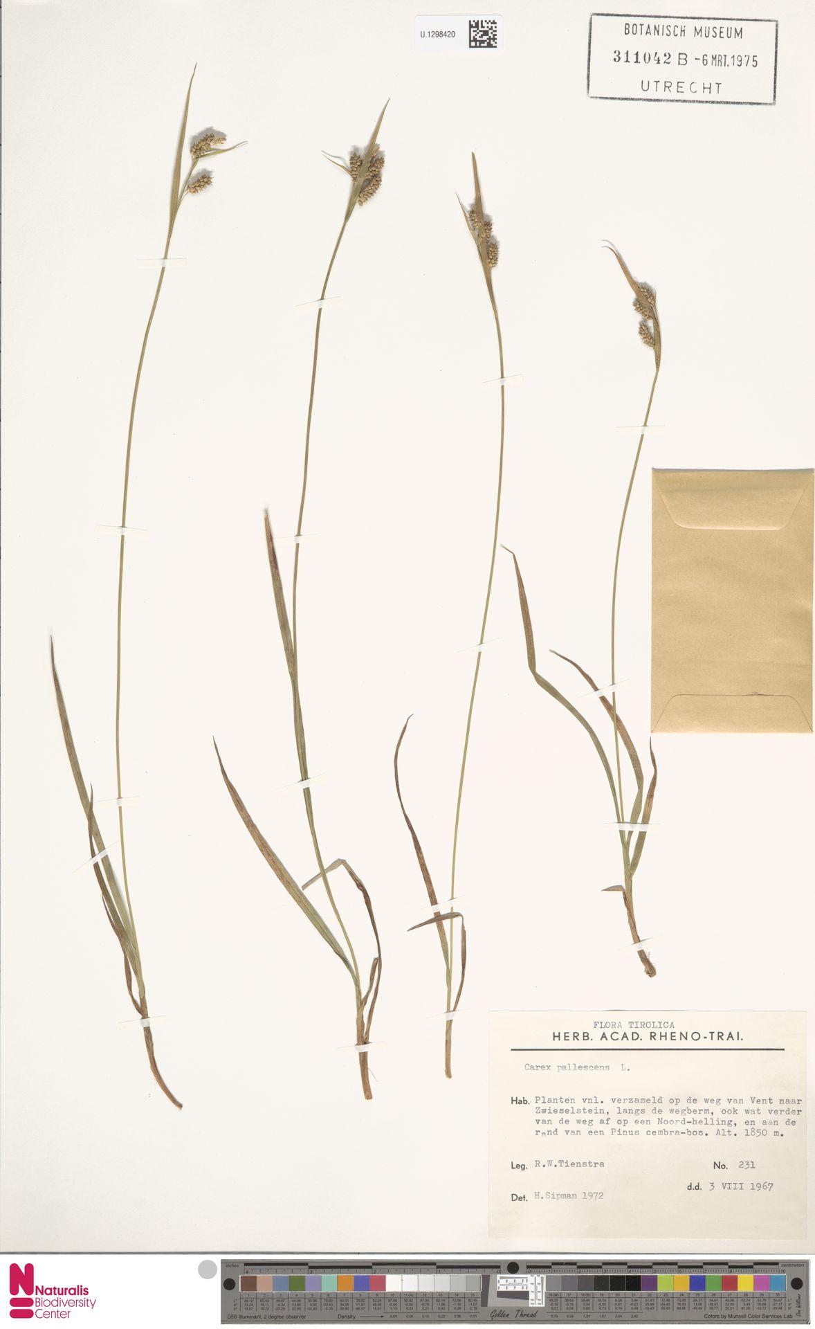 U.1298420 | Carex pallescens L.