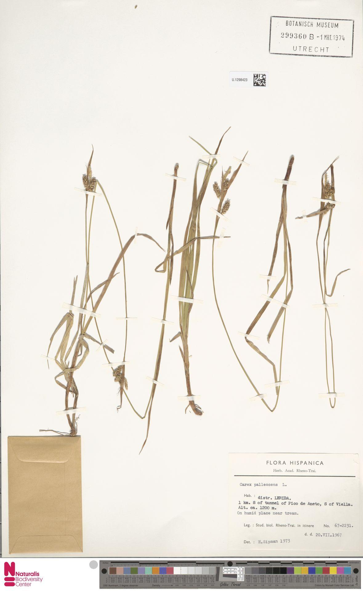 U.1298423 | Carex pallescens L.