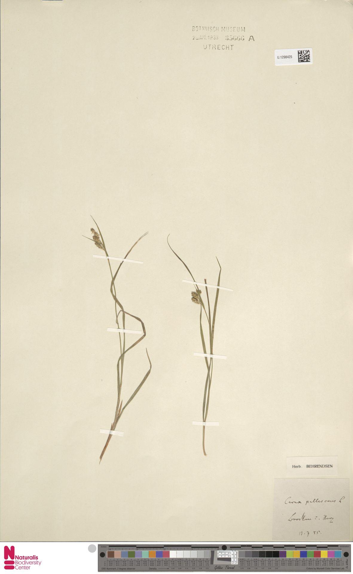 U.1298425 | Carex pallescens L.