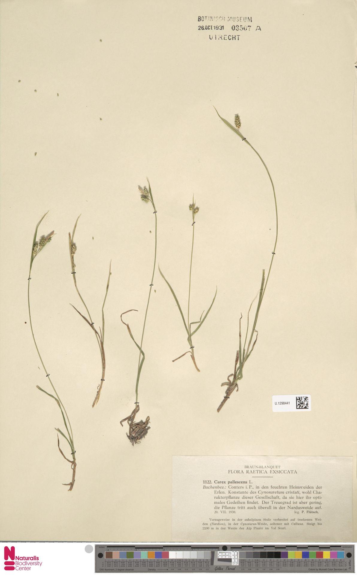 U.1298441 | Carex pallescens L.