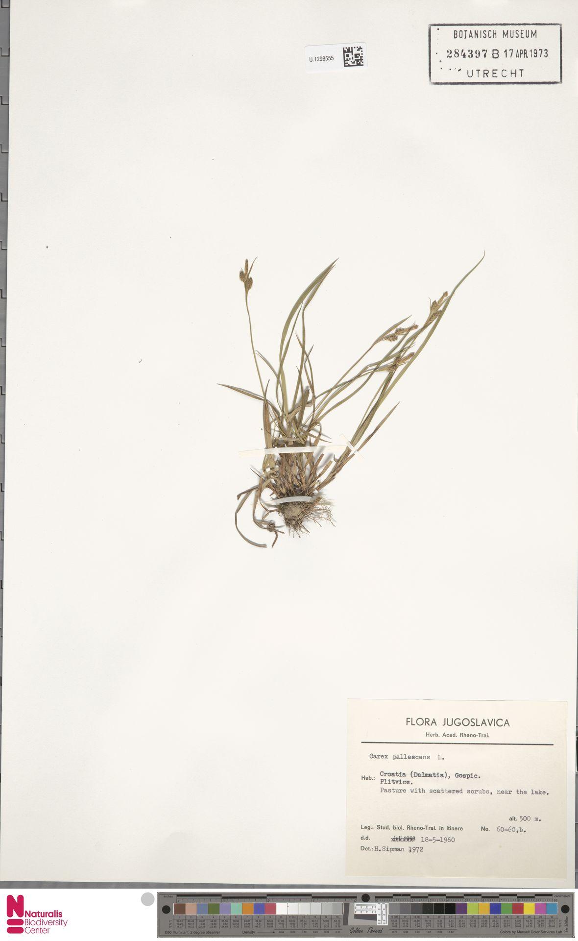 U.1298555   Carex pallescens L.
