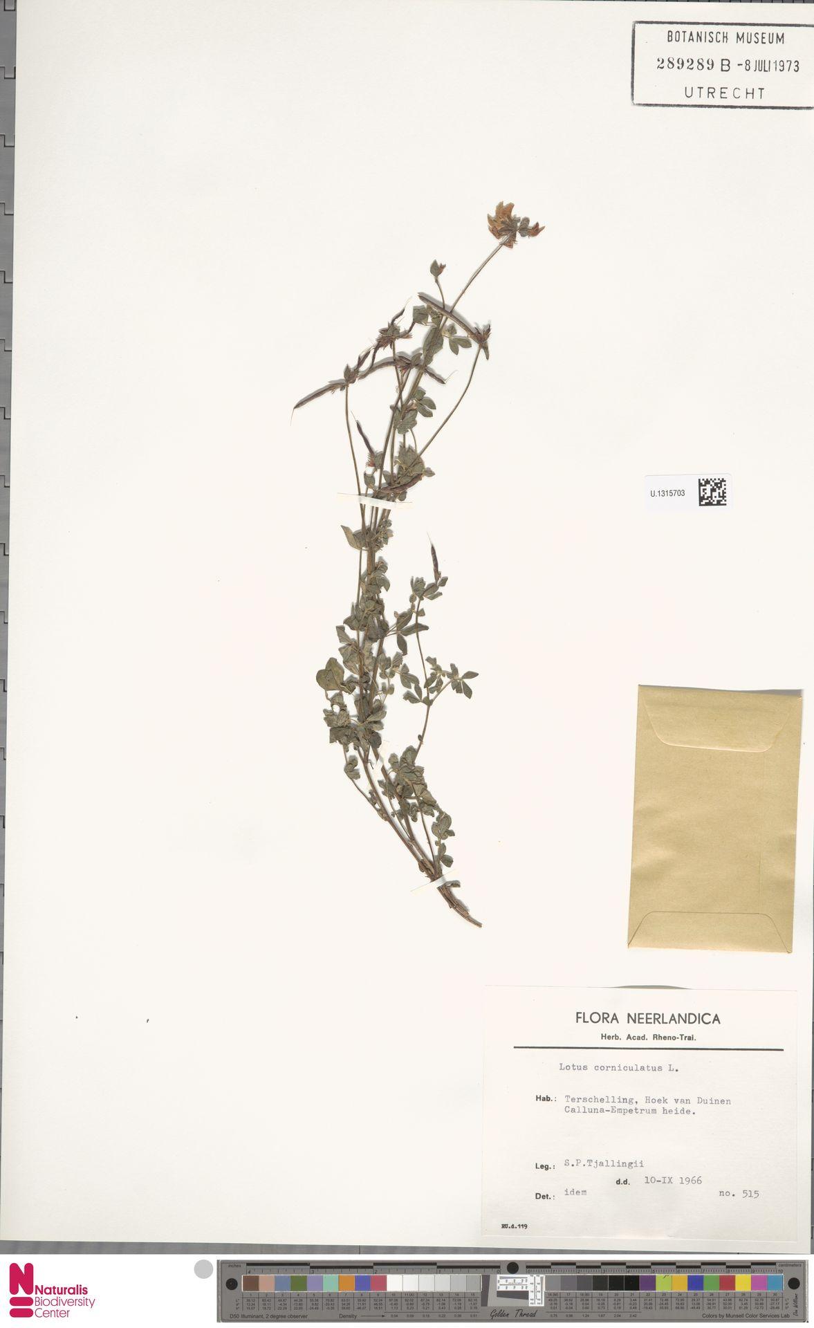 U.1315703 | Lotus corniculatus L.