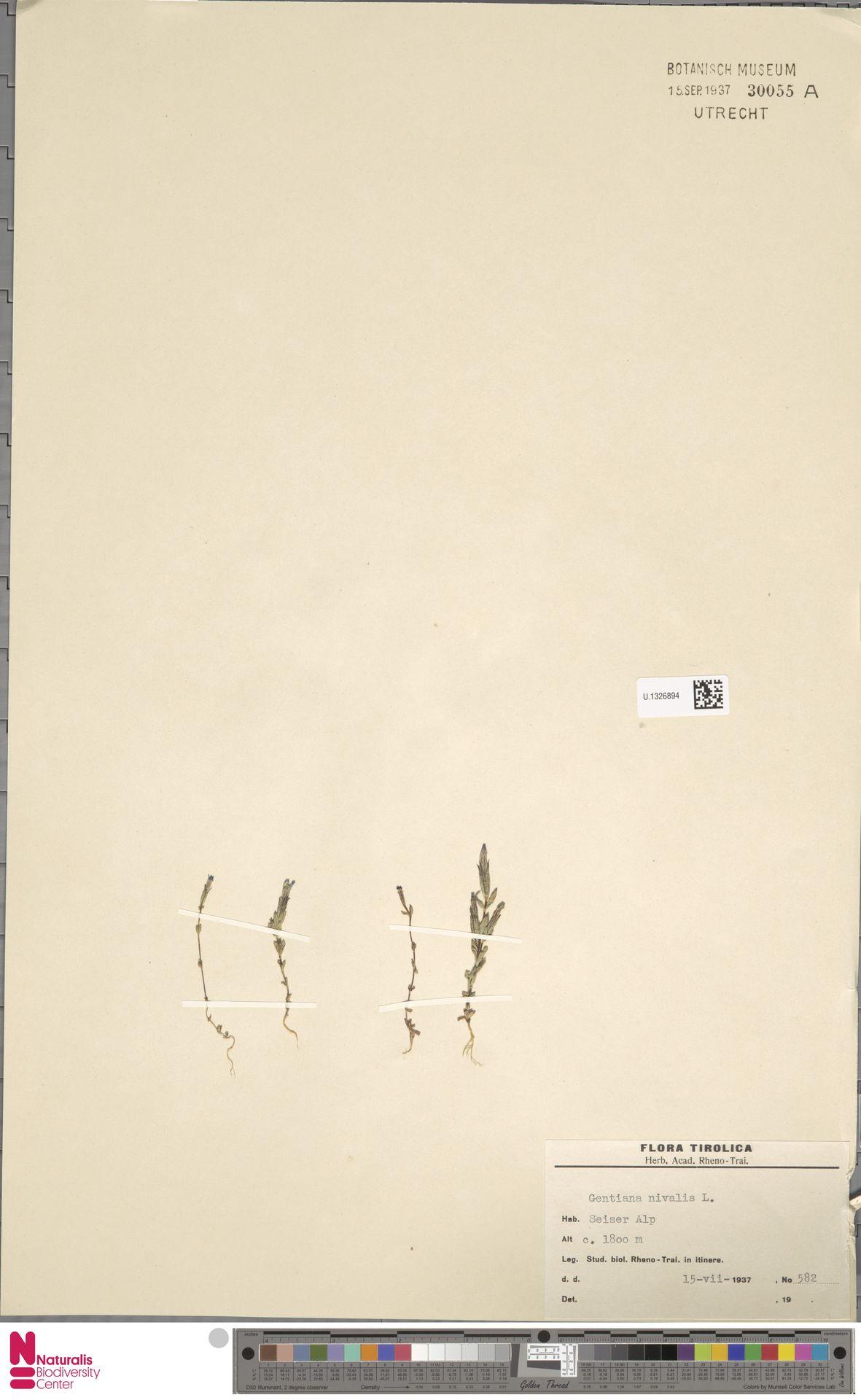 U.1326894 | Gentiana nivalis L.