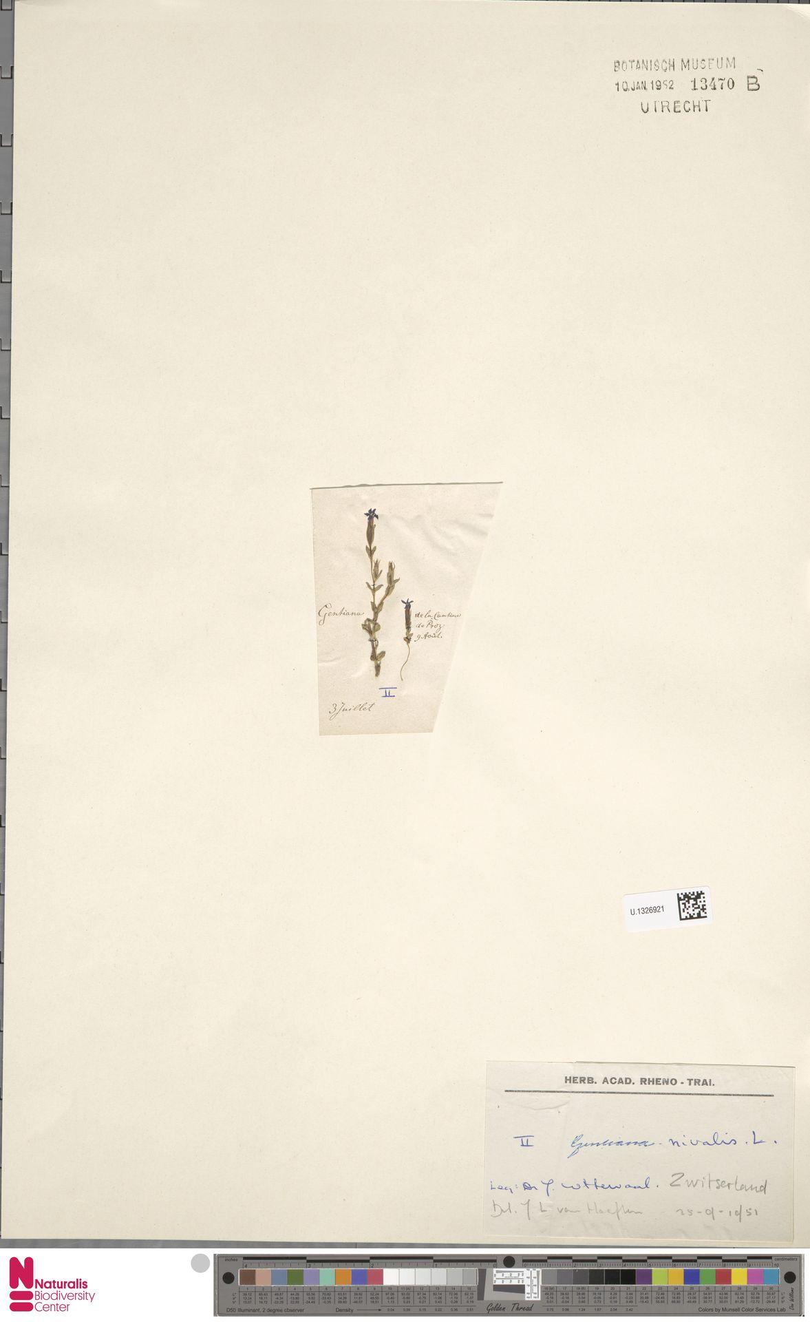 U.1326921 | Gentiana nivalis L.