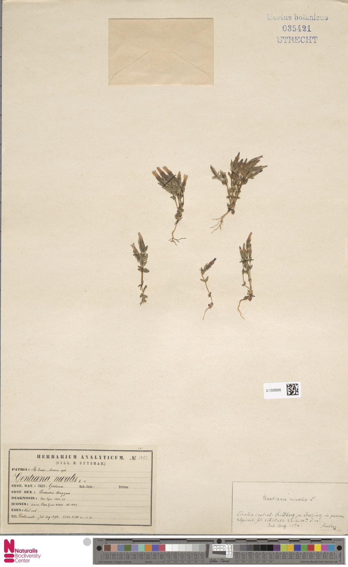 U.1326926 | Gentiana nivalis L.