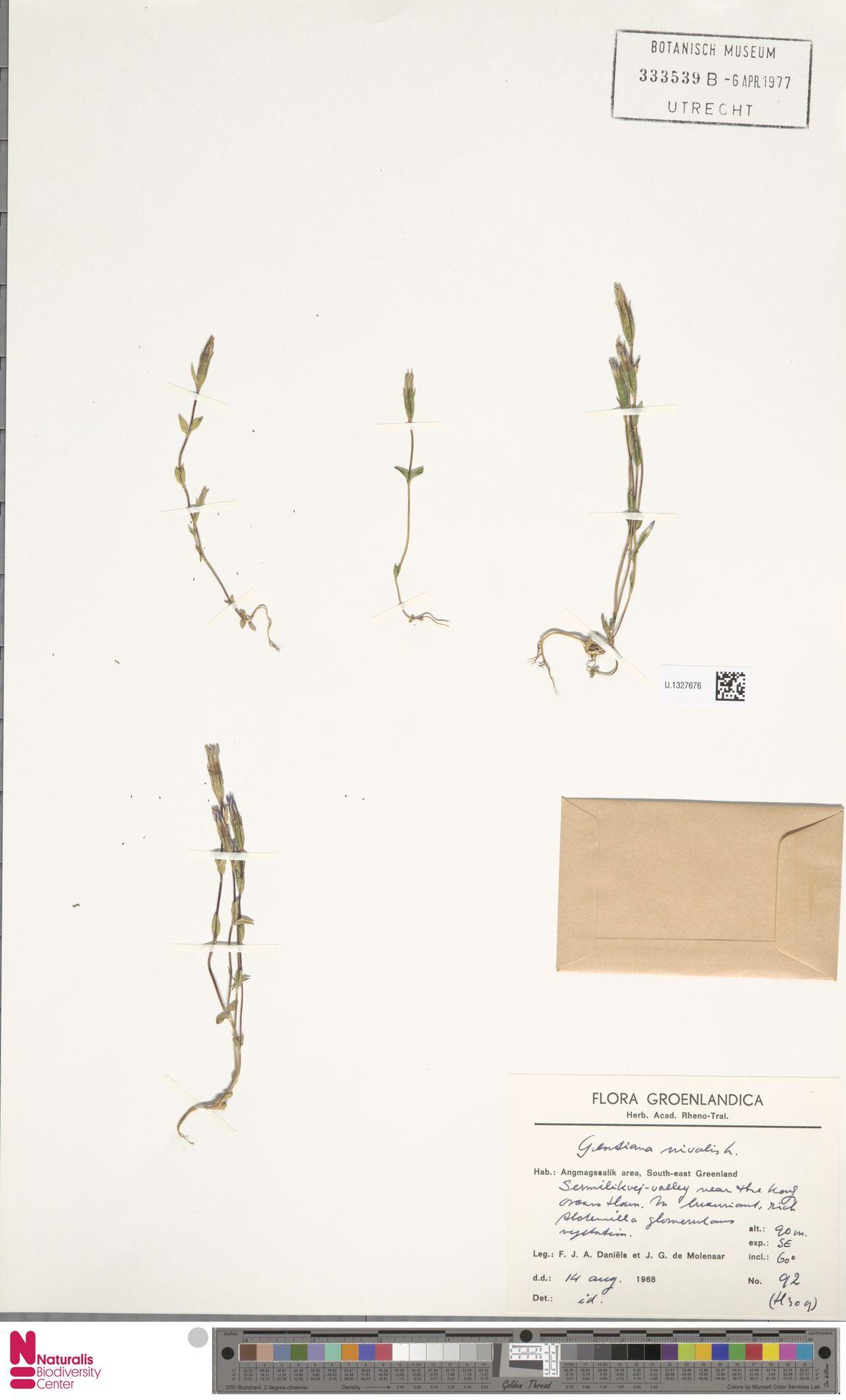 U.1327676 | Gentiana nivalis L.