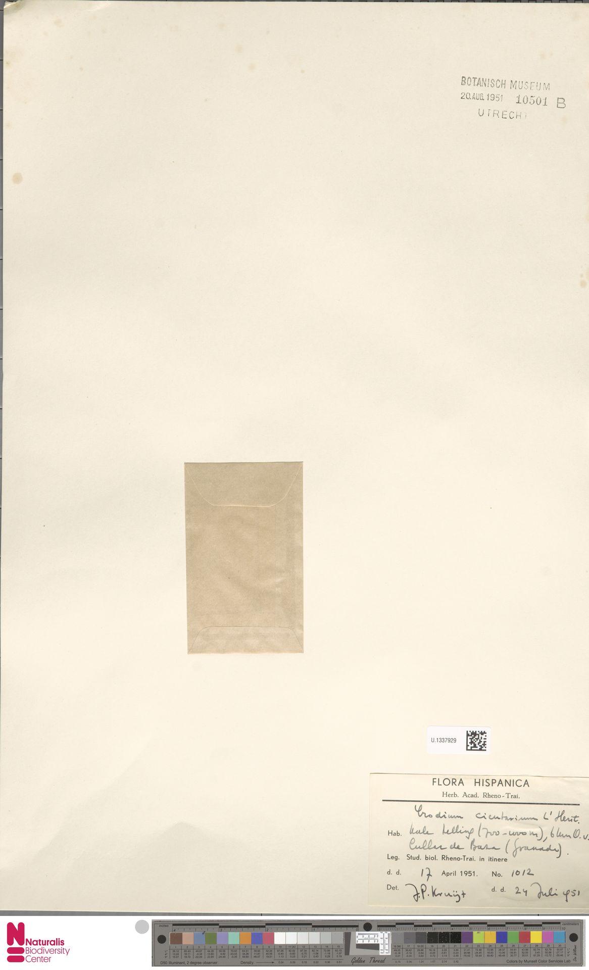 U.1337929 | Erodium cicutarium (L.) L'Hér.