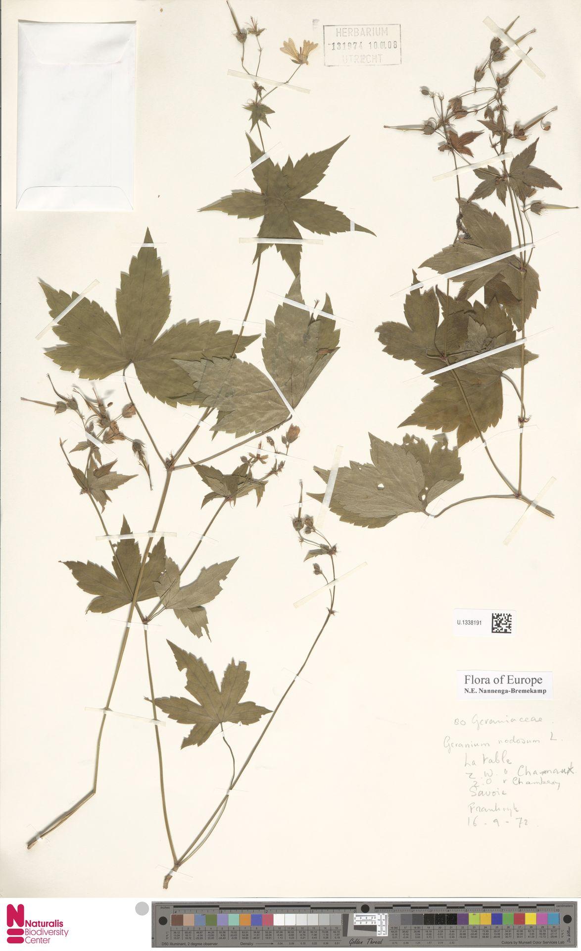 U.1338191 | Geranium nodosum L.