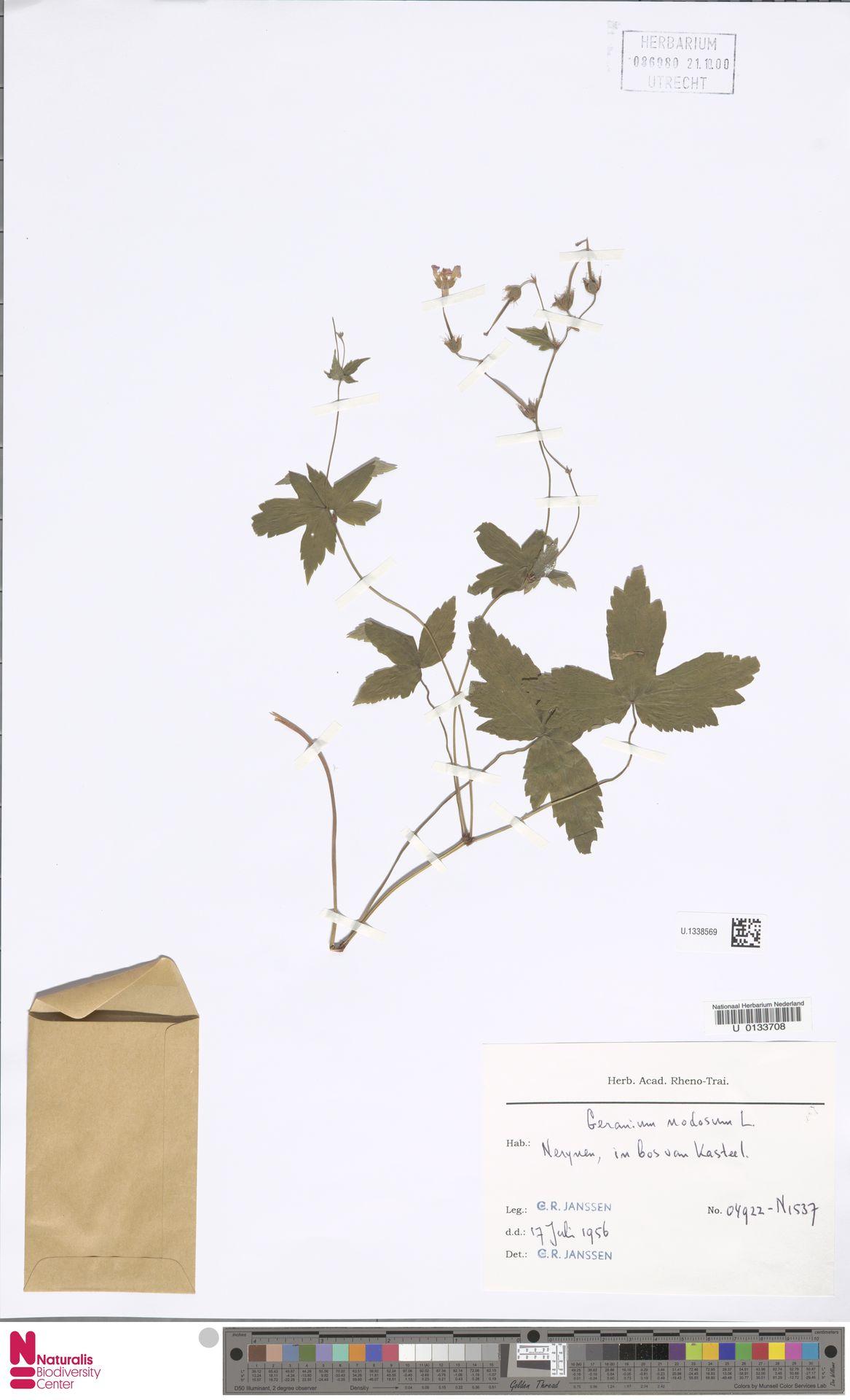 U.1338569 | Geranium nodosum L.