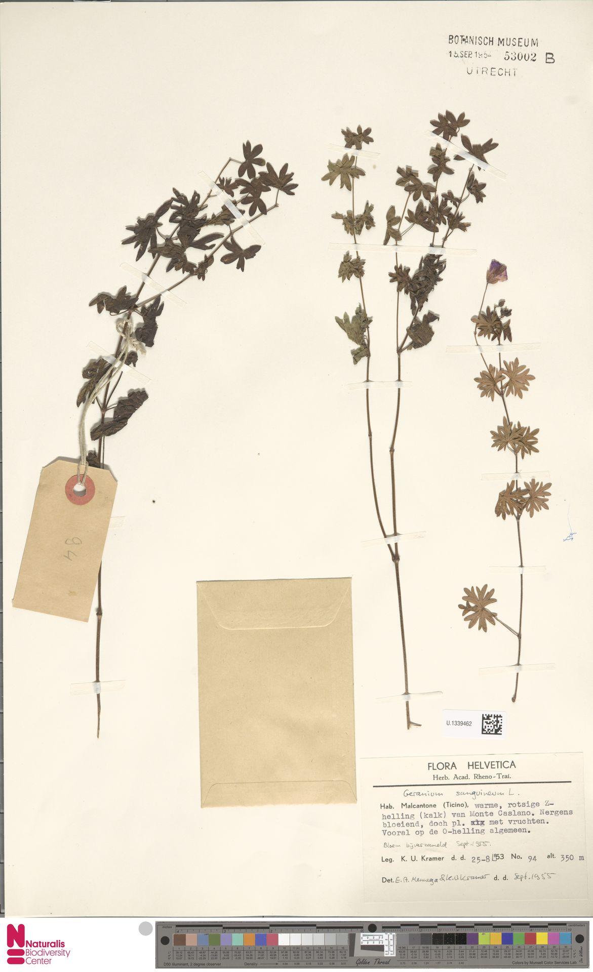 U.1339462 | Geranium sanguineum L.
