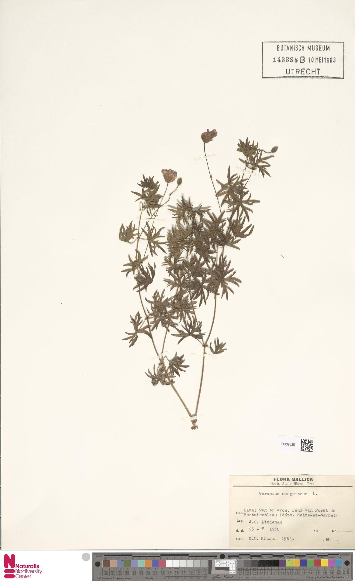 U.1339535 | Geranium sanguineum L.