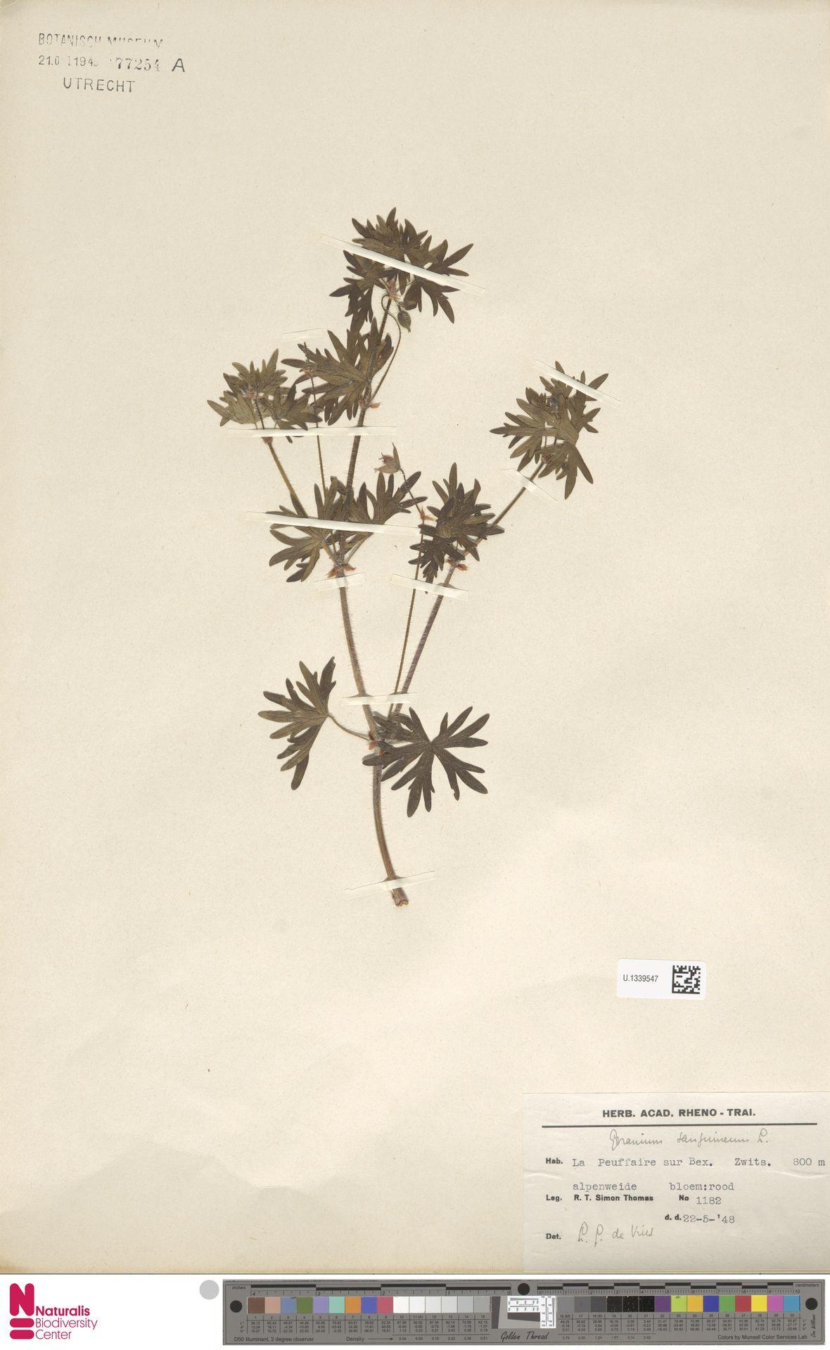 U.1339547 | Geranium sanguineum L.
