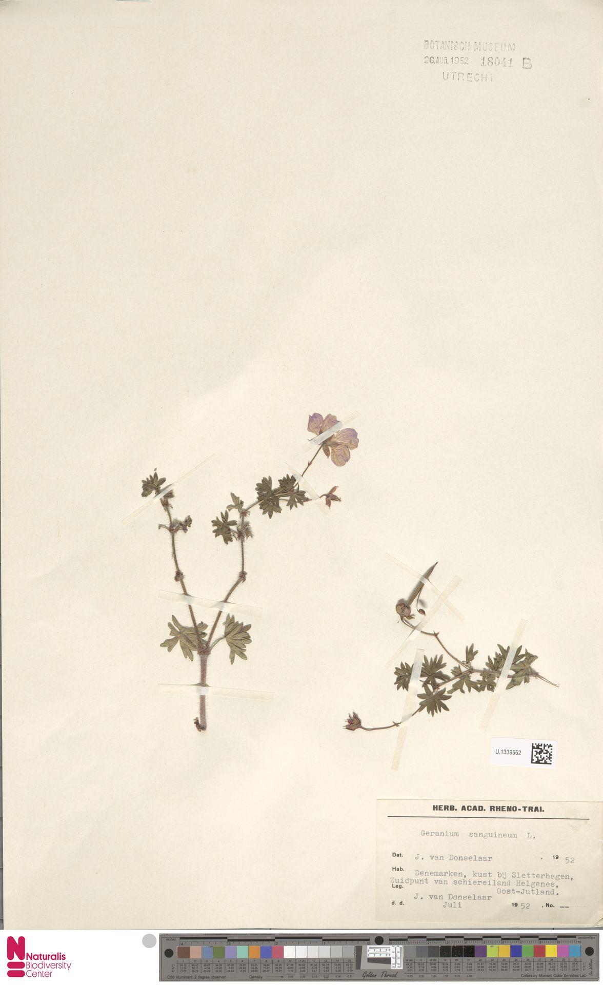 U.1339552 | Geranium sanguineum L.