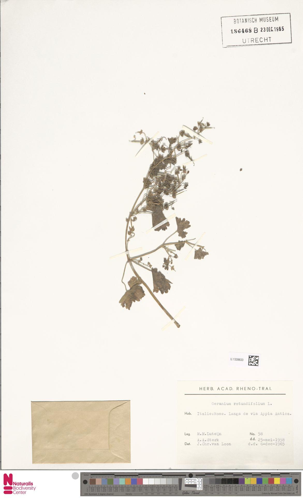 U.1339633 | Geranium rotundifolium L.