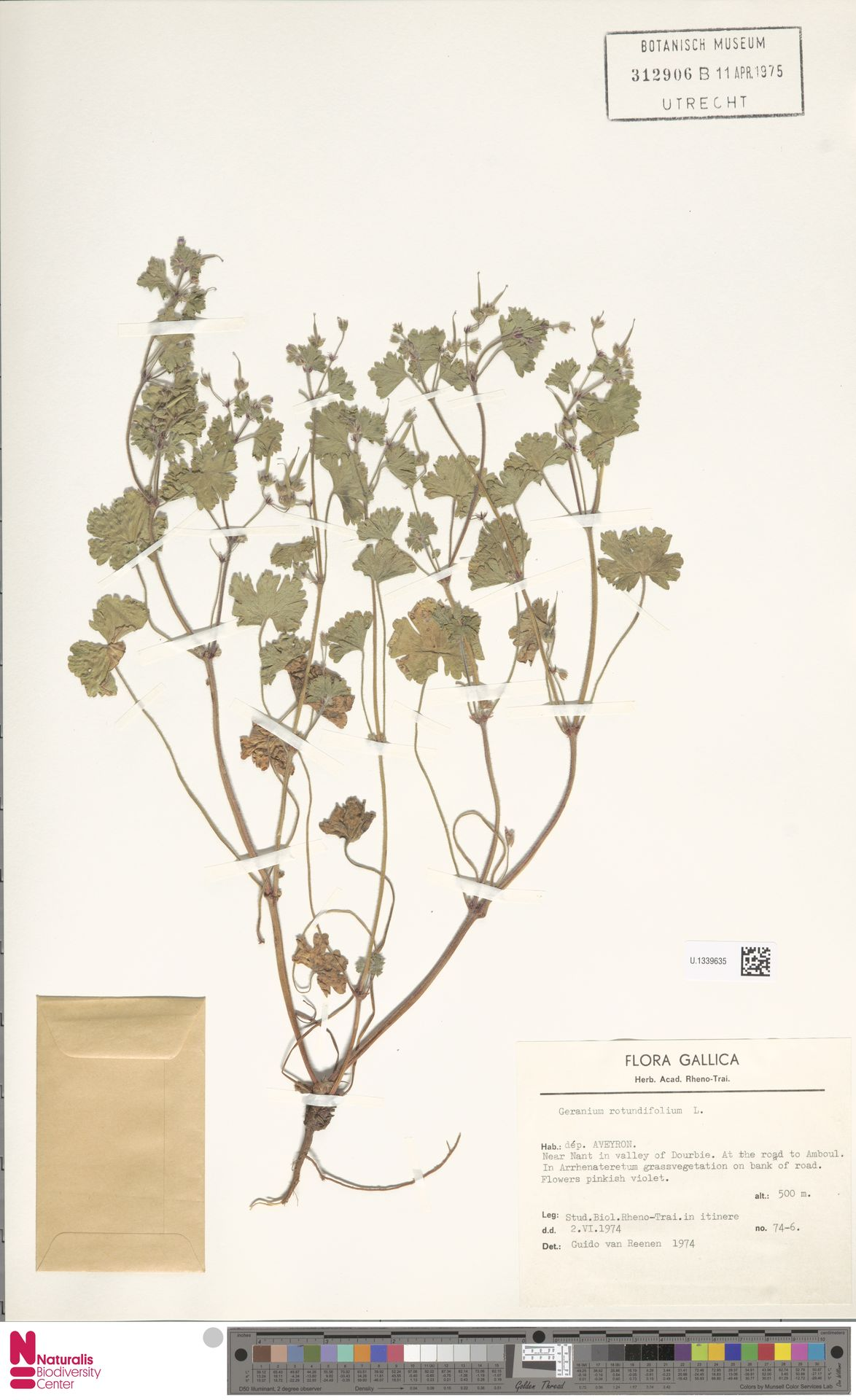 U.1339635   Geranium rotundifolium L.