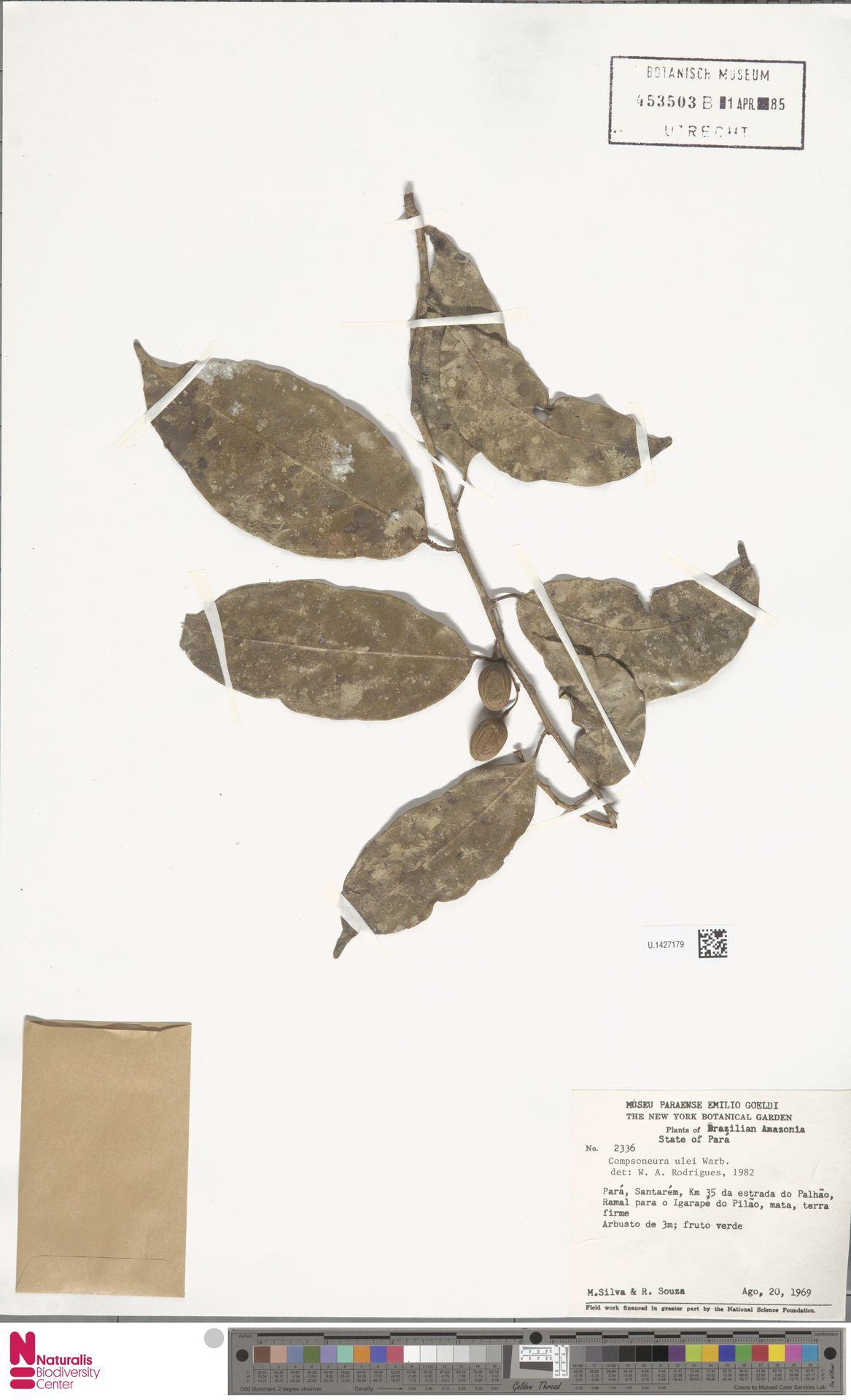 U.1427179 | Compsoneura ulei Warb.
