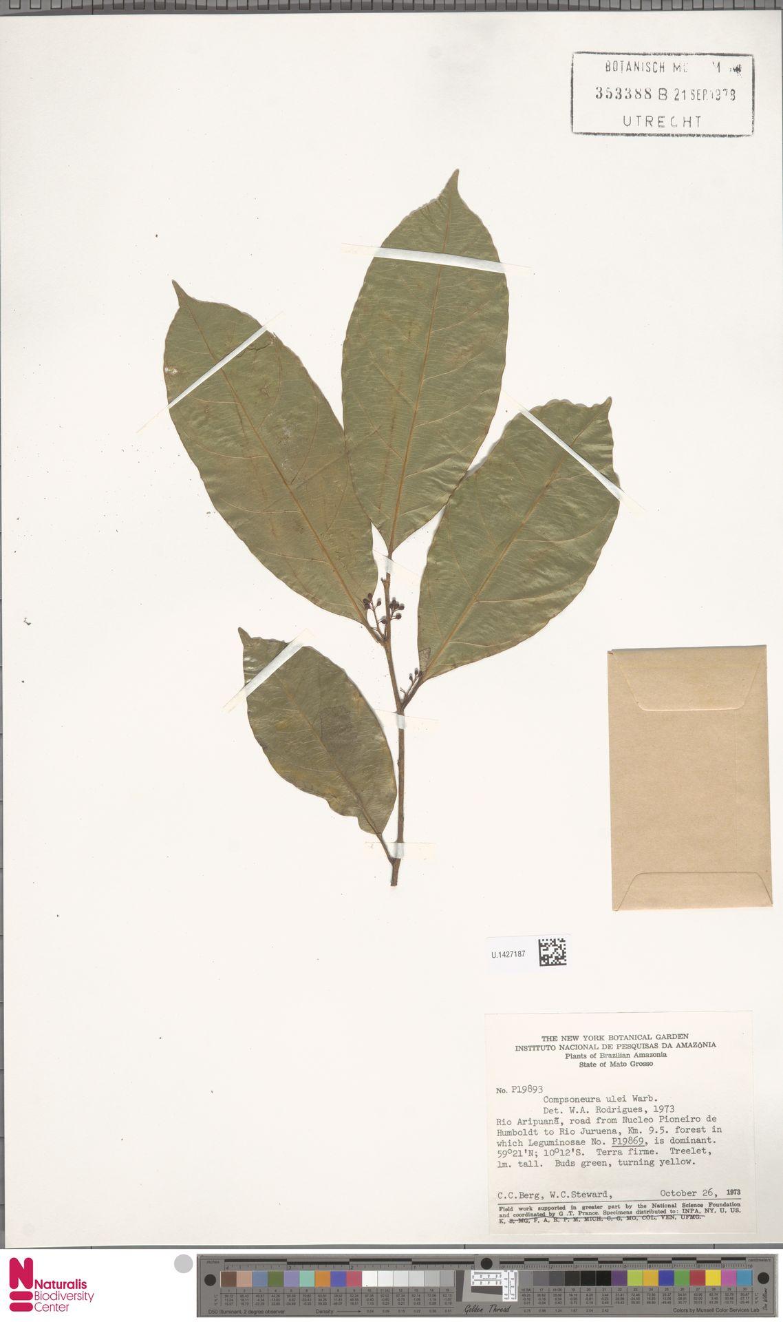U.1427187 | Compsoneura ulei Warb.