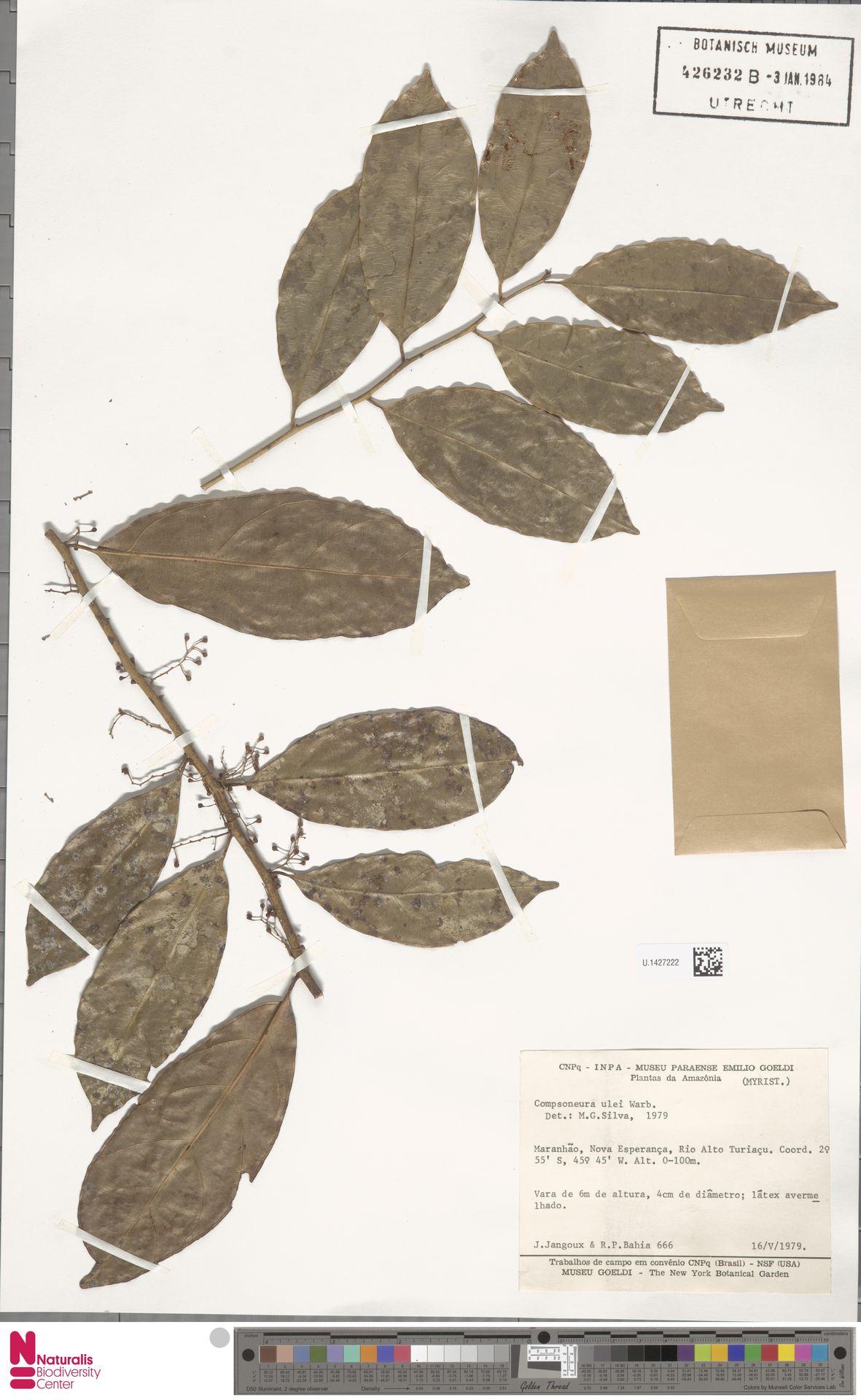 U.1427222 | Compsoneura ulei Warb.