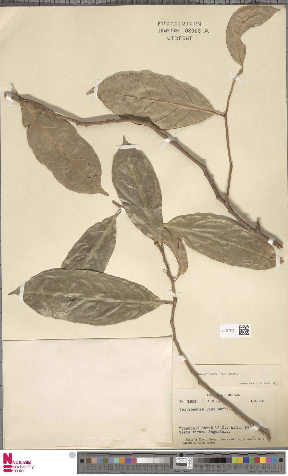 U.1427226 | Compsoneura ulei Warb.