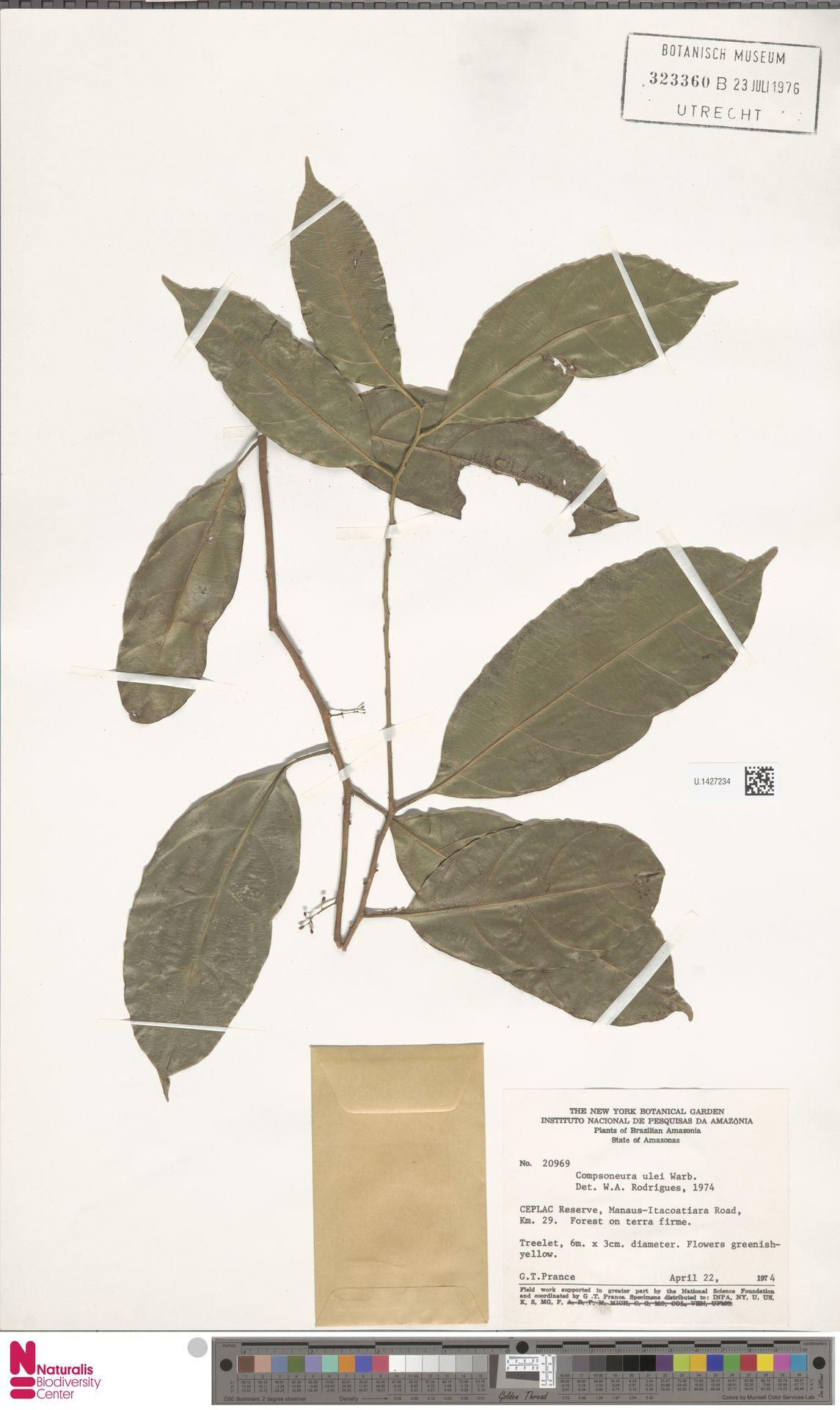 U.1427234 | Compsoneura ulei Warb.