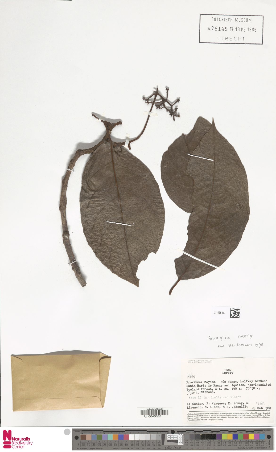 U.1455417 | Guapira noxia (Netto) Lundell