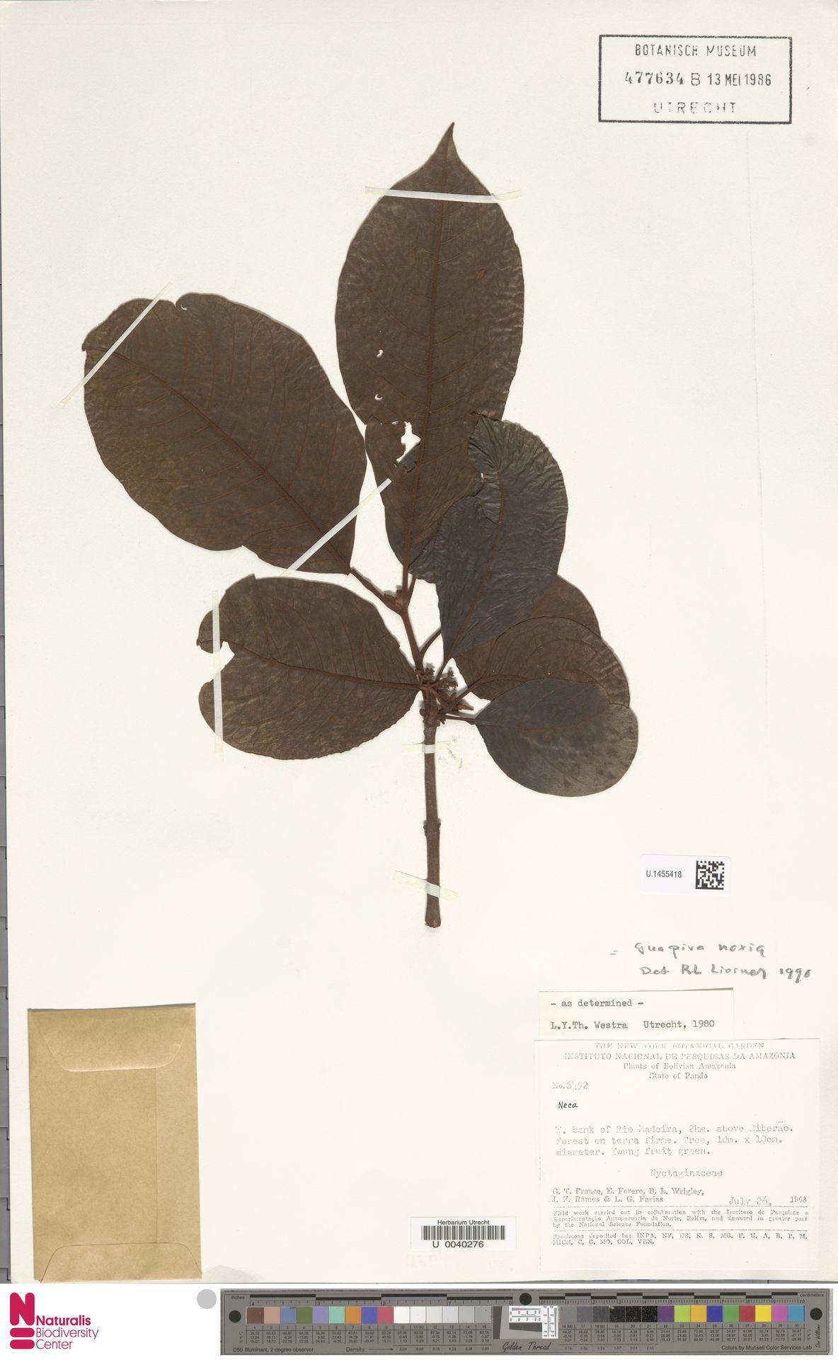 U.1455418 | Guapira noxia (Netto) Lundell