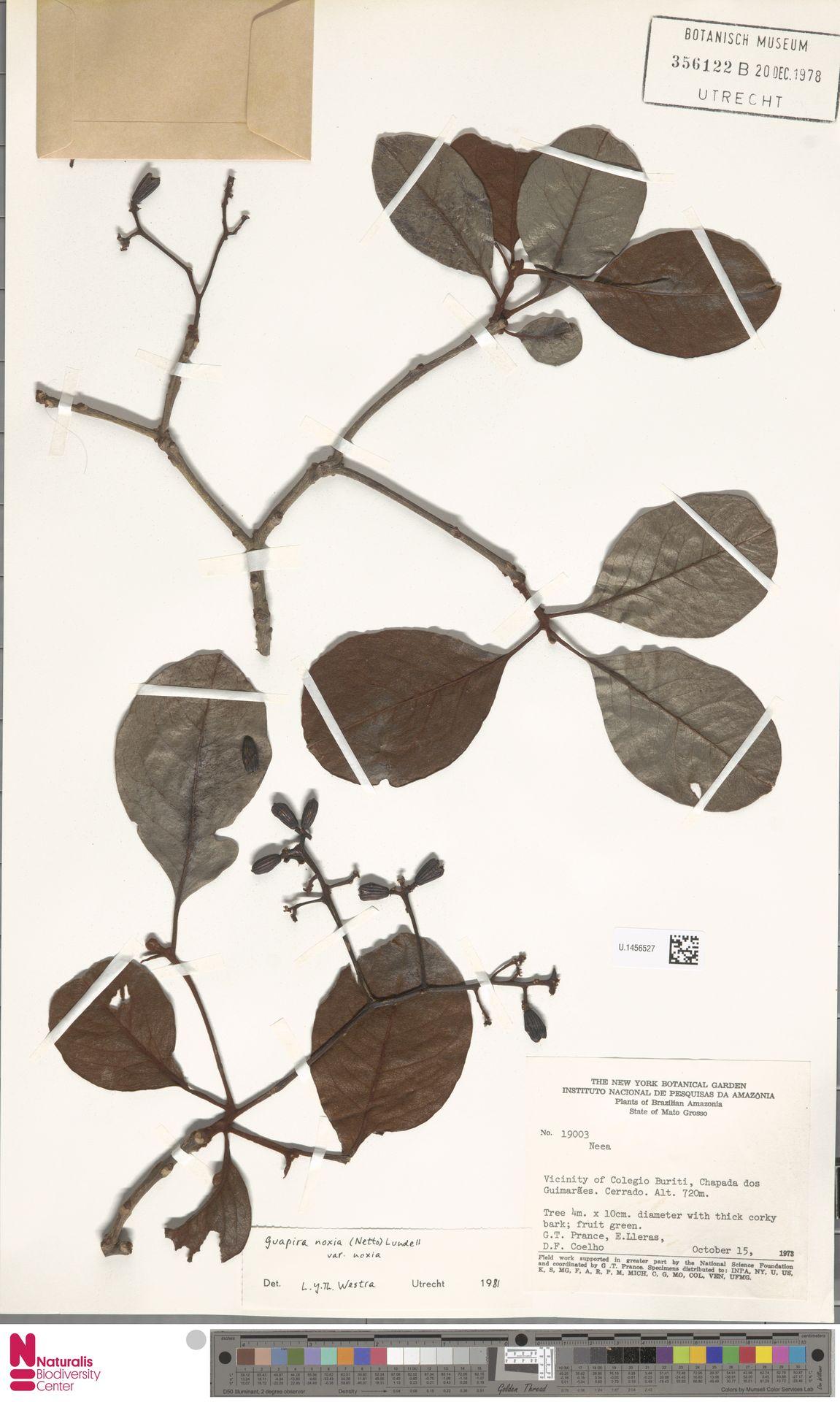 U.1456527 | Guapira noxia (Netto) Lundell