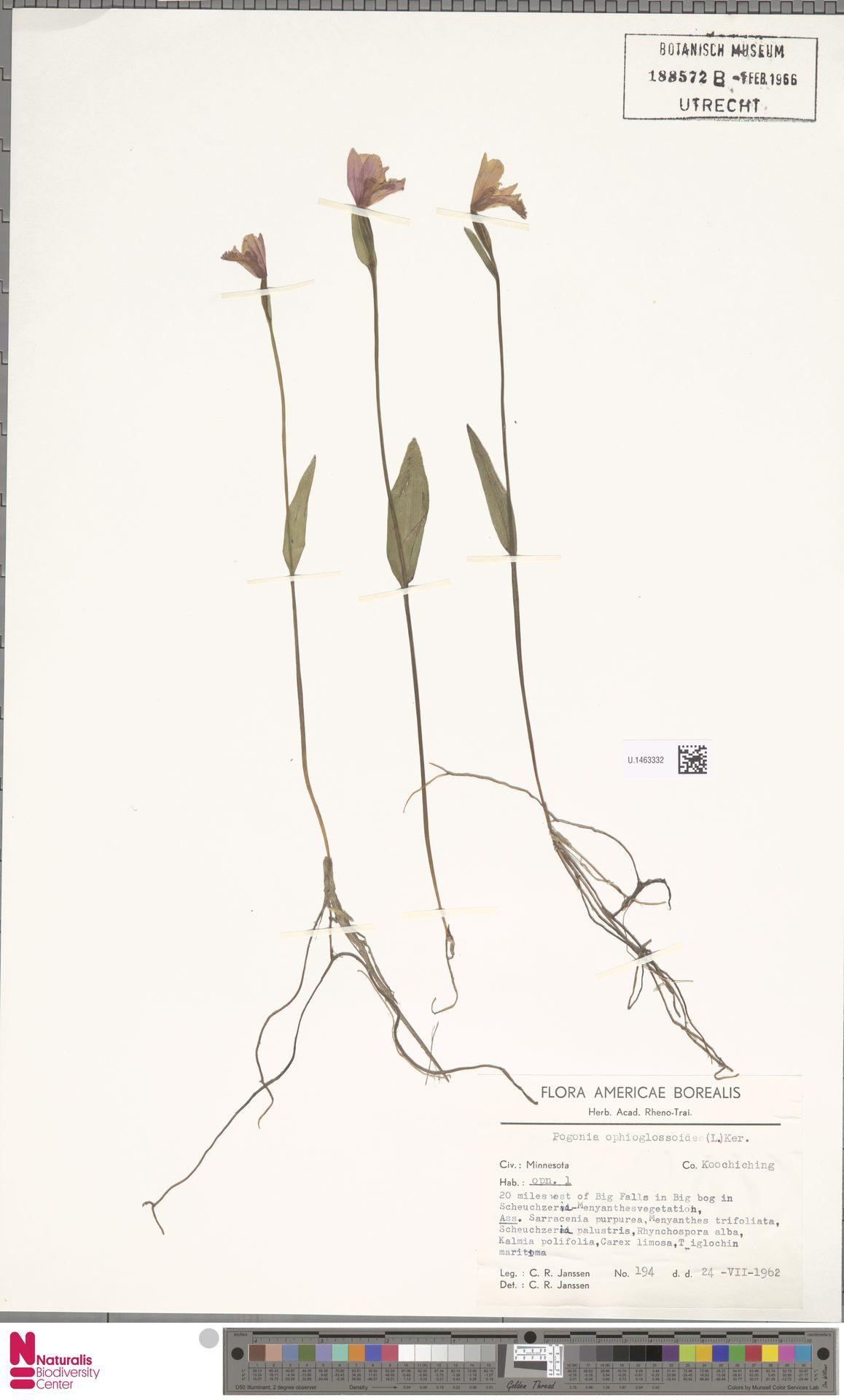 U.1463332 | Pogonia ophioglossoides Nutt.