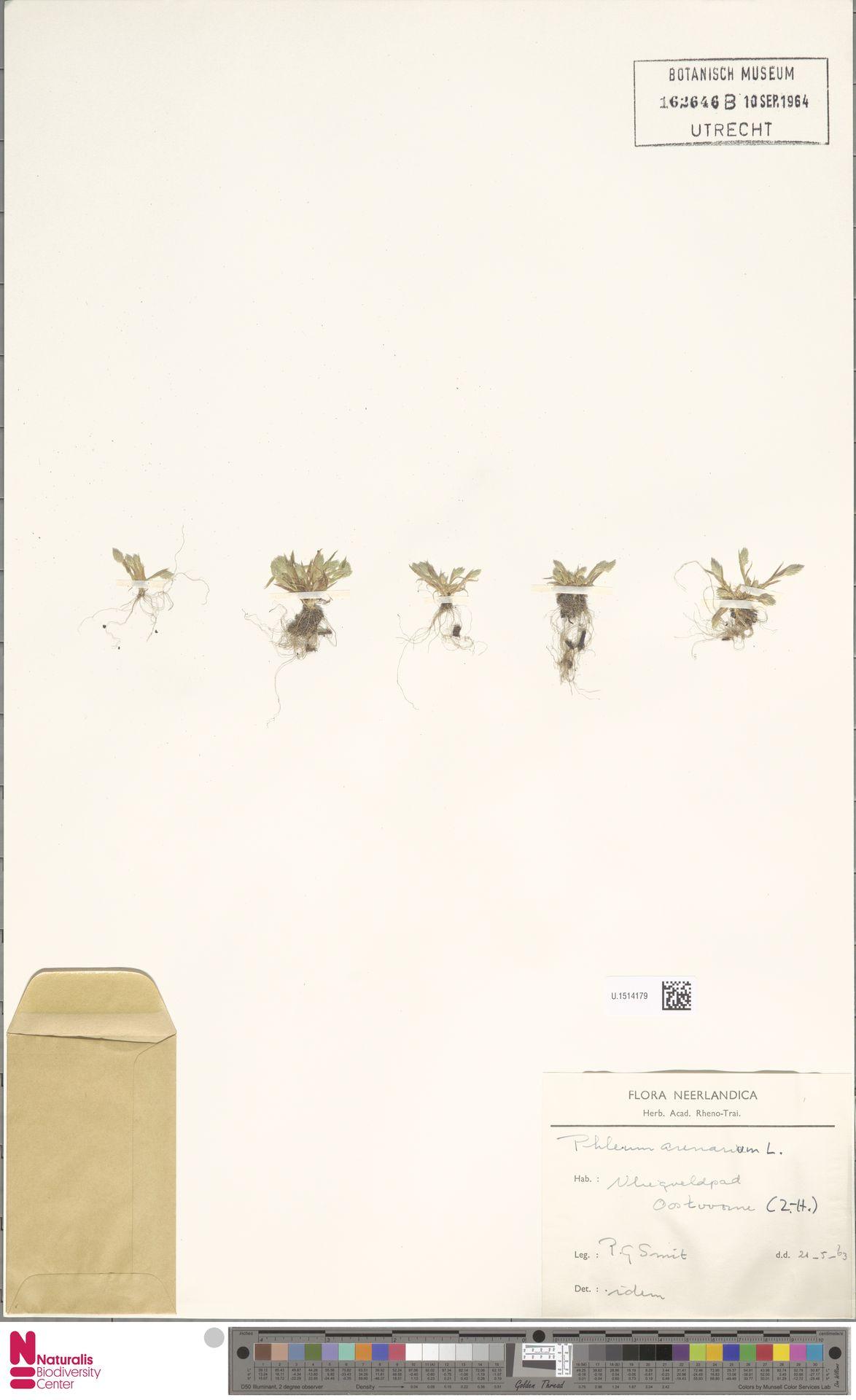 U.1514179 | Phleum arenarium L.