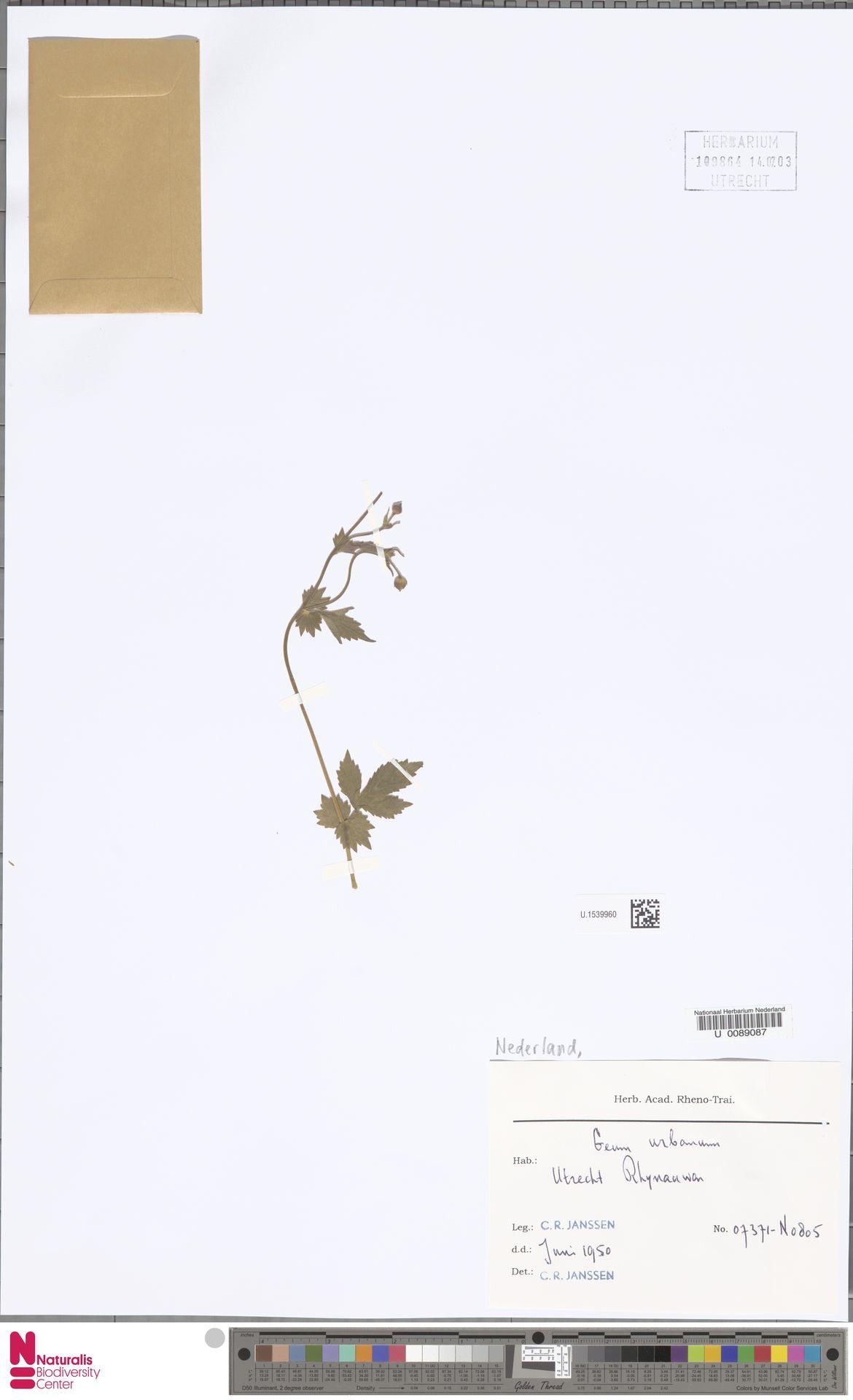 U.1539960 | Geum urbanum L.