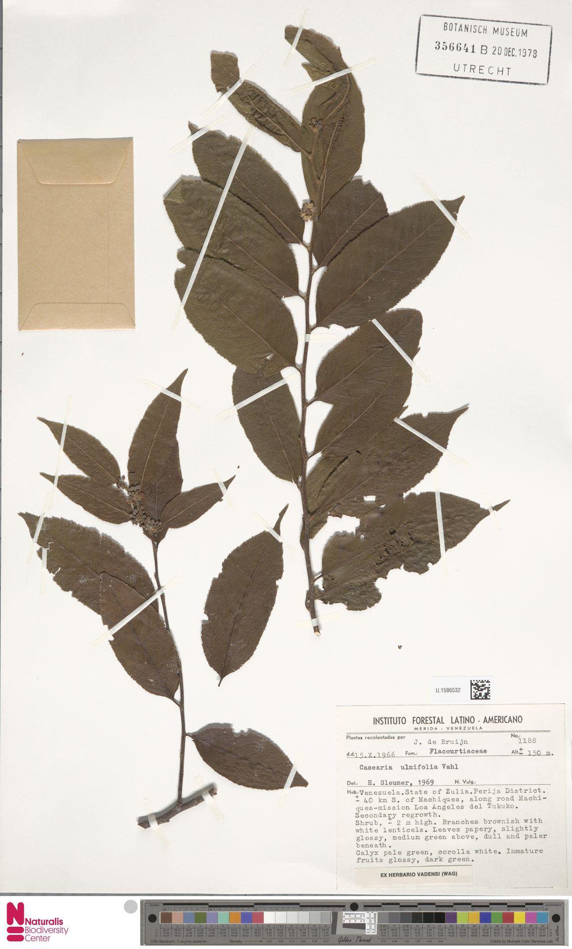 U.1586532 | Casearia ulmifolia Vahl ex Vent.