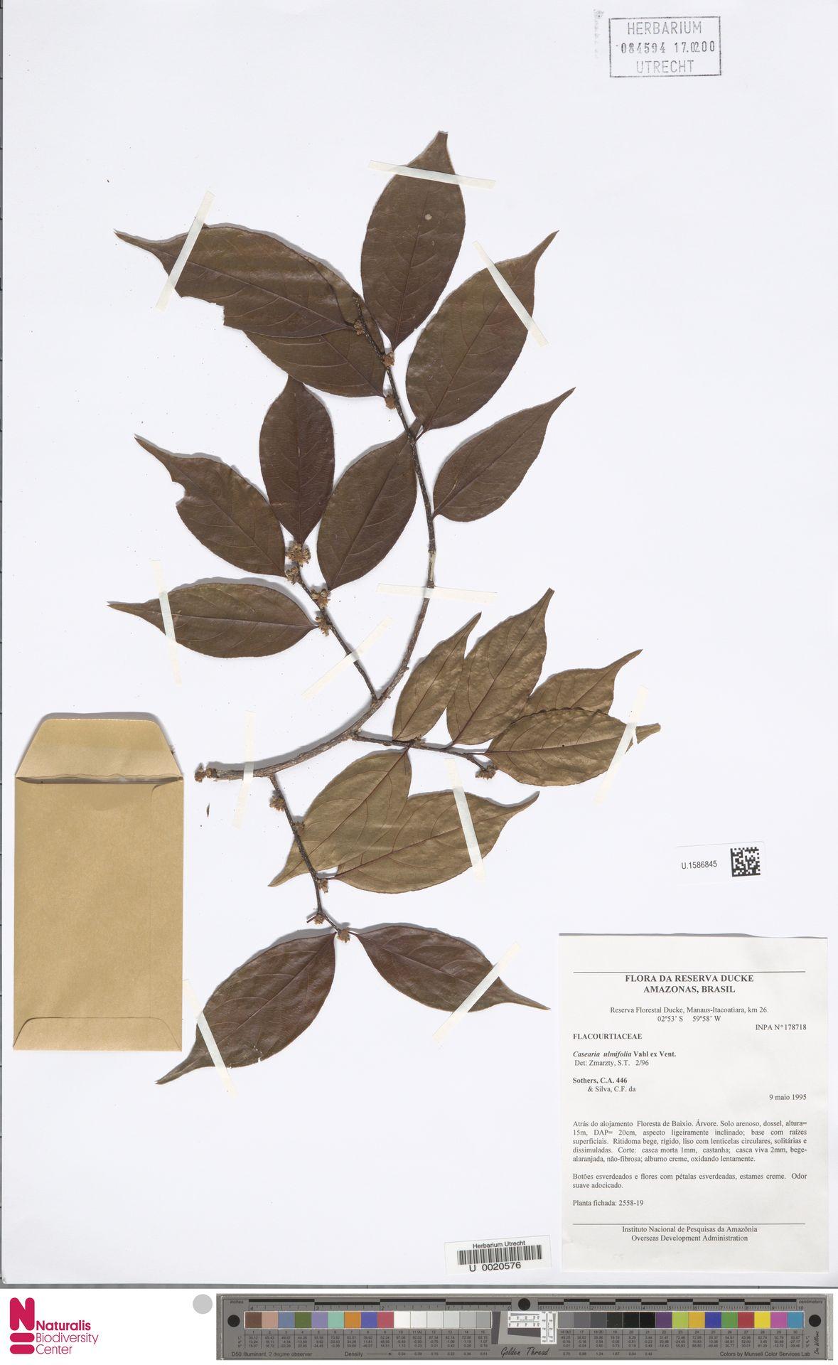 U.1586845 | Casearia ulmifolia Vahl ex Vent.