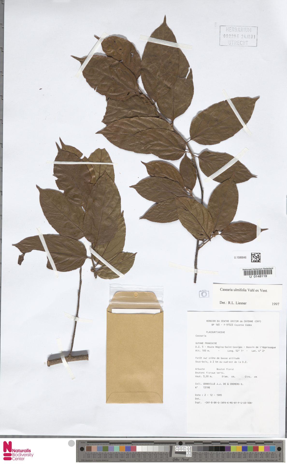 U.1586846 | Casearia ulmifolia Vahl ex Vent.