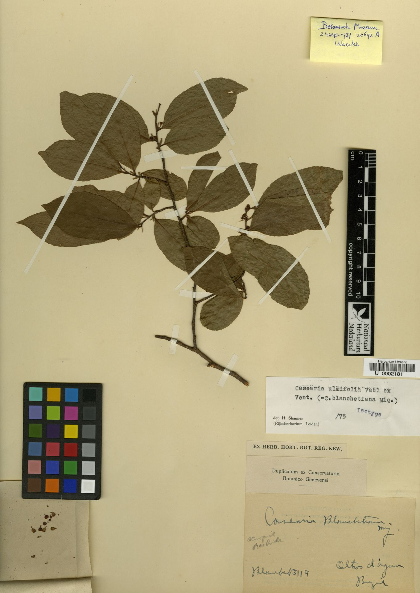 U  0002181 | Casearia ulmifolia Vahl ex Vent.