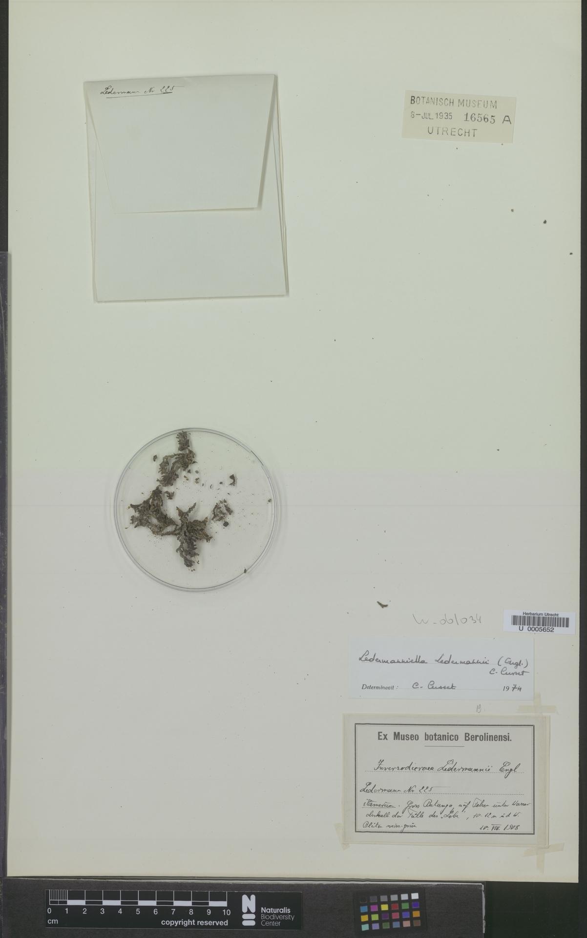 U  0005652 | Ledermanniella ledermannii (Engl.) C.Cusset