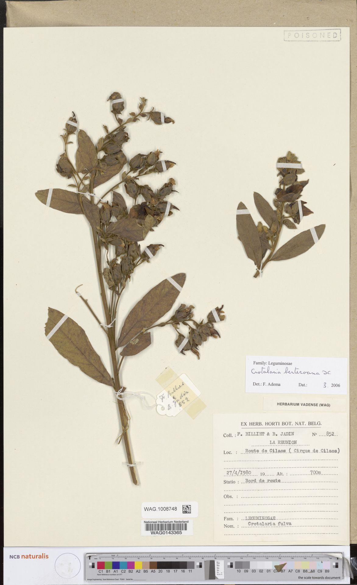 WAG.1008748 | Crotalaria berteroana DC.