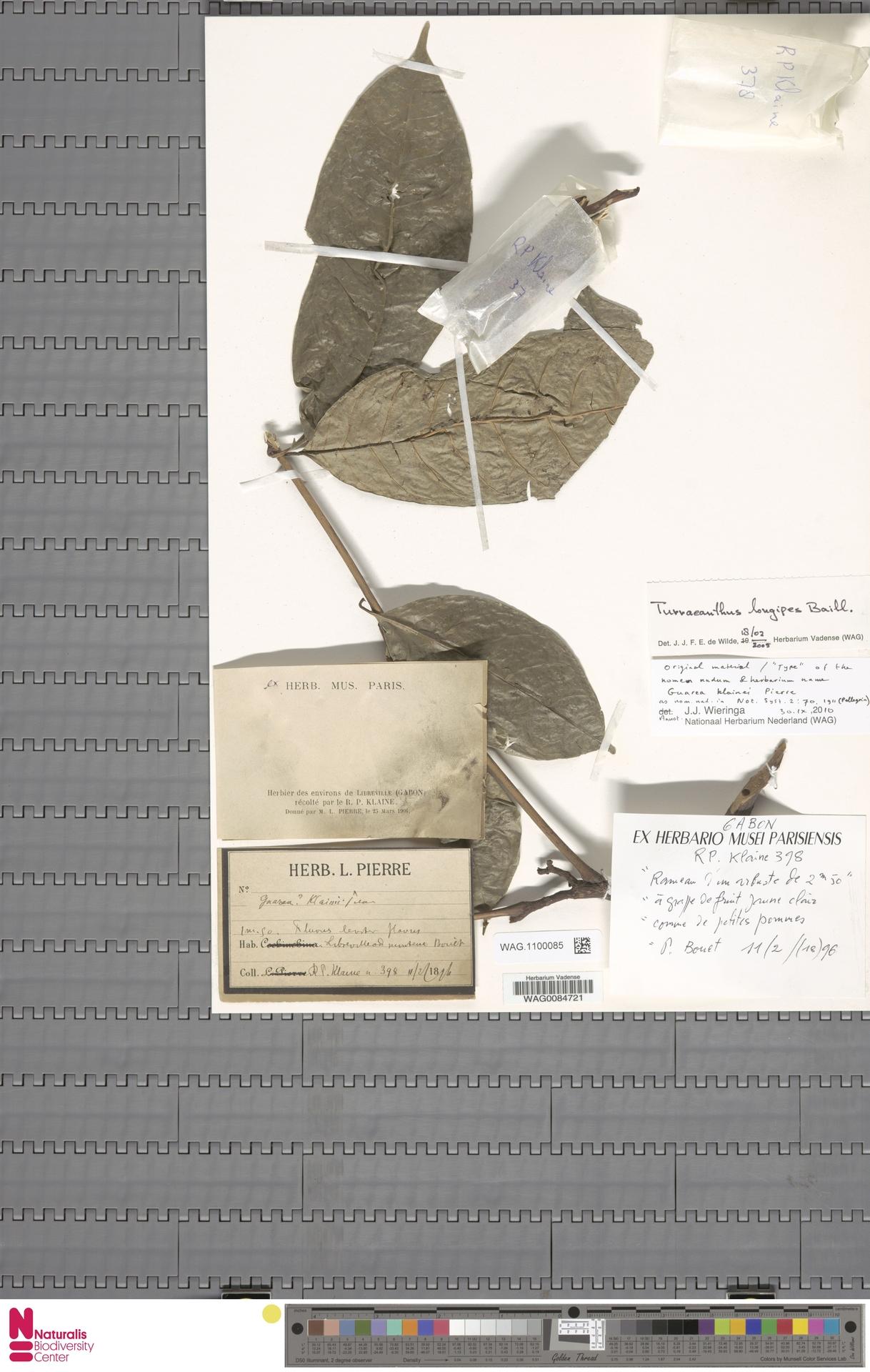 WAG.1100085 | Turraeanthus longipes Baill.