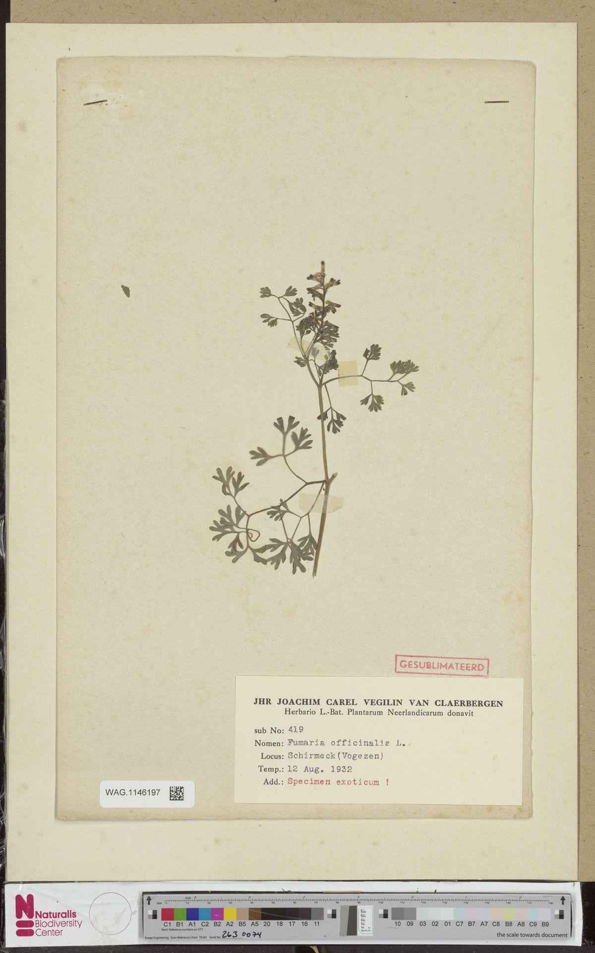 WAG.1146197 | Fumaria officinalis L.