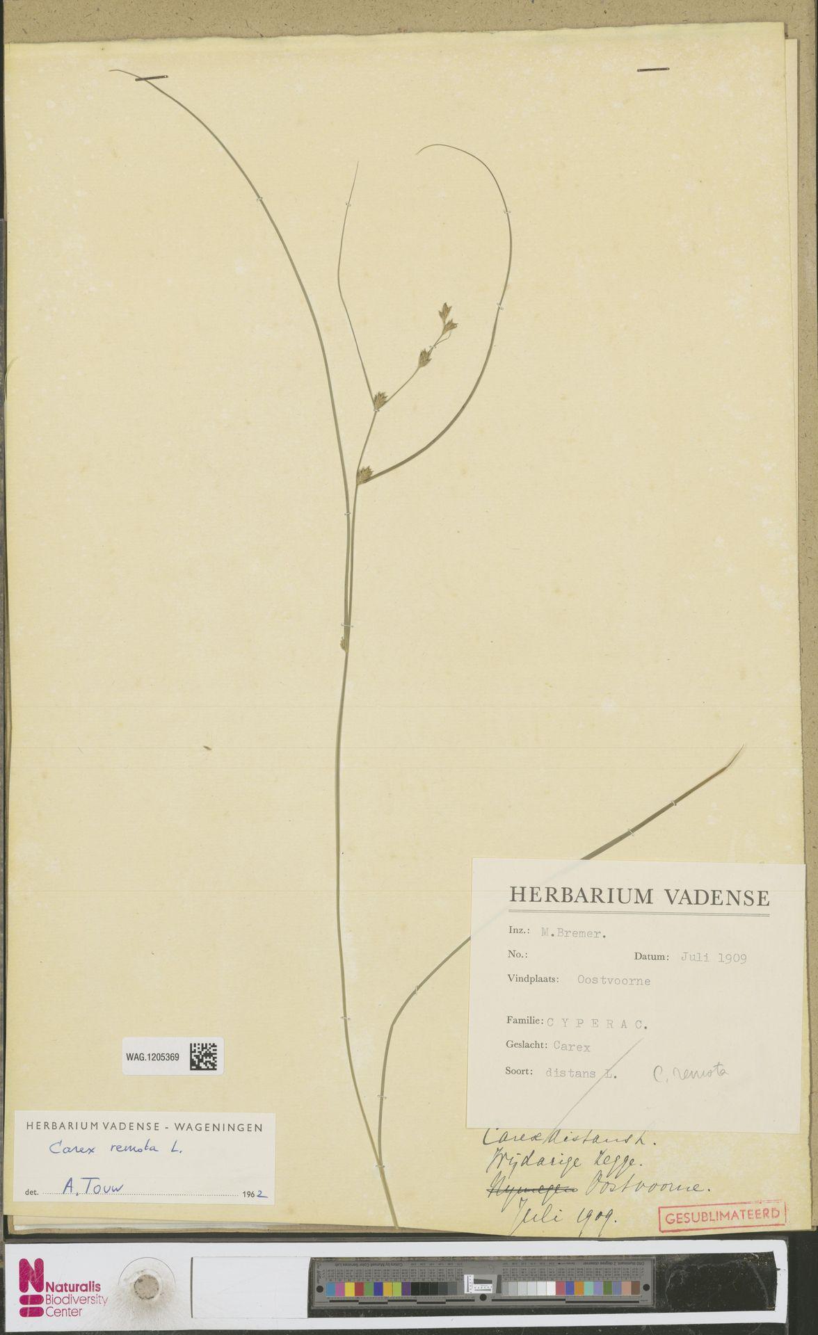 WAG.1205369 | Carex remota L.