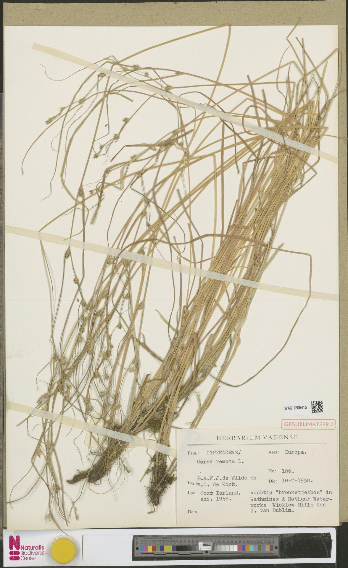 WAG.1205415 | Carex remota L.