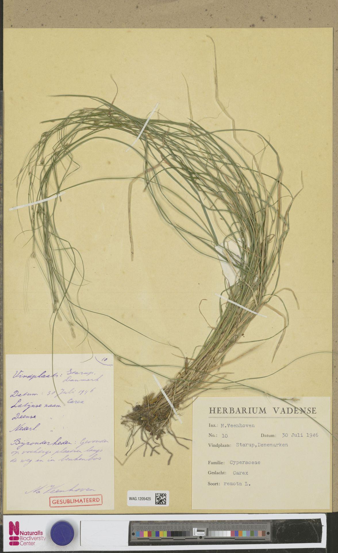 WAG.1205425 | Carex remota L.