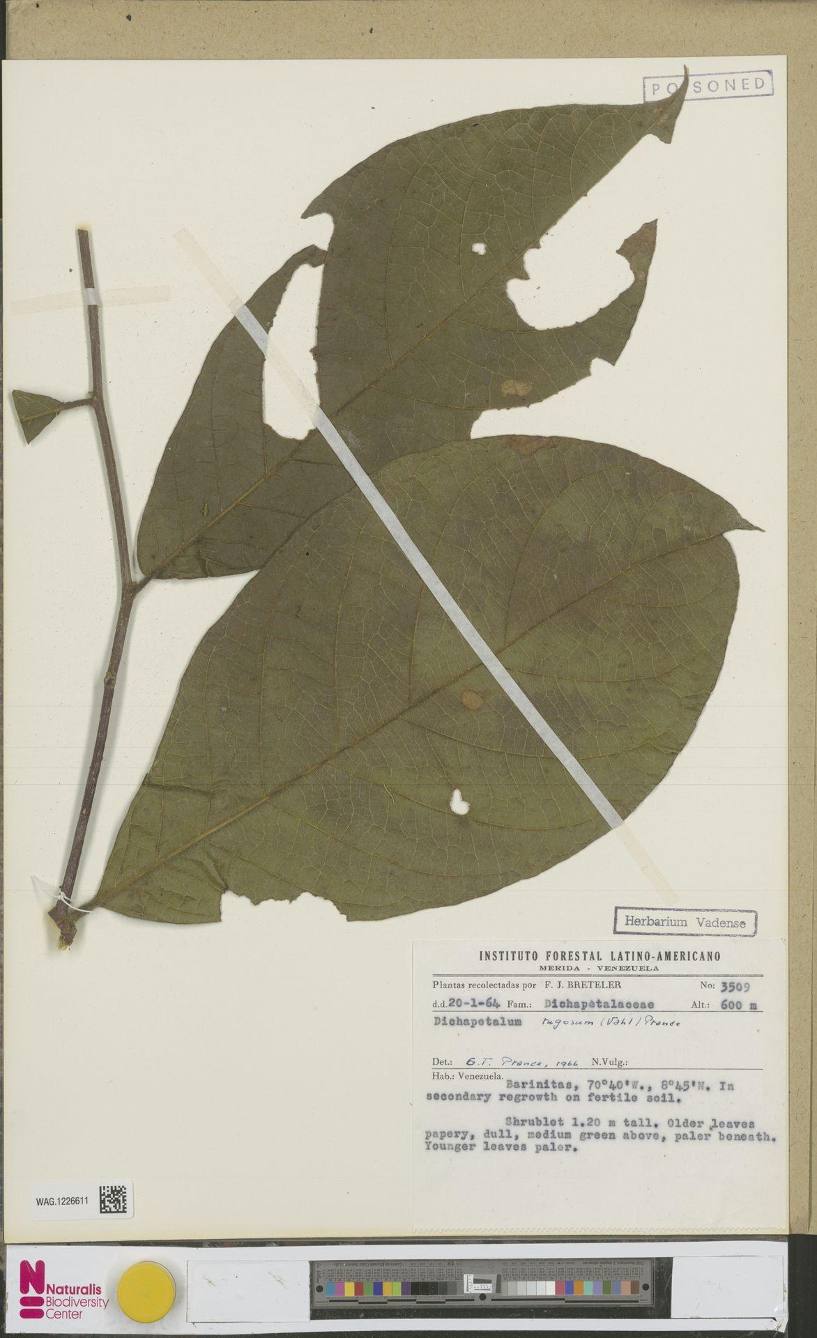 WAG.1226611 | Dichapetalum rugosum (Vahl) Prance