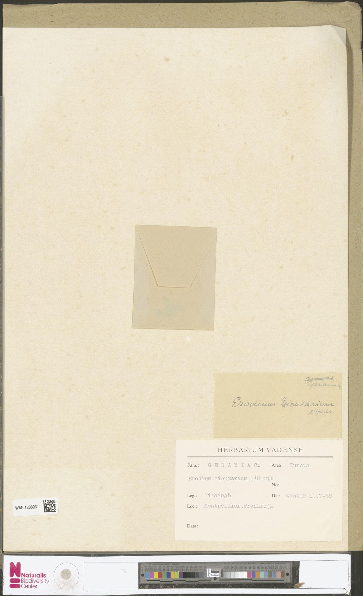 WAG.1288931 | Erodium cicutarium (L.) L'Hér.