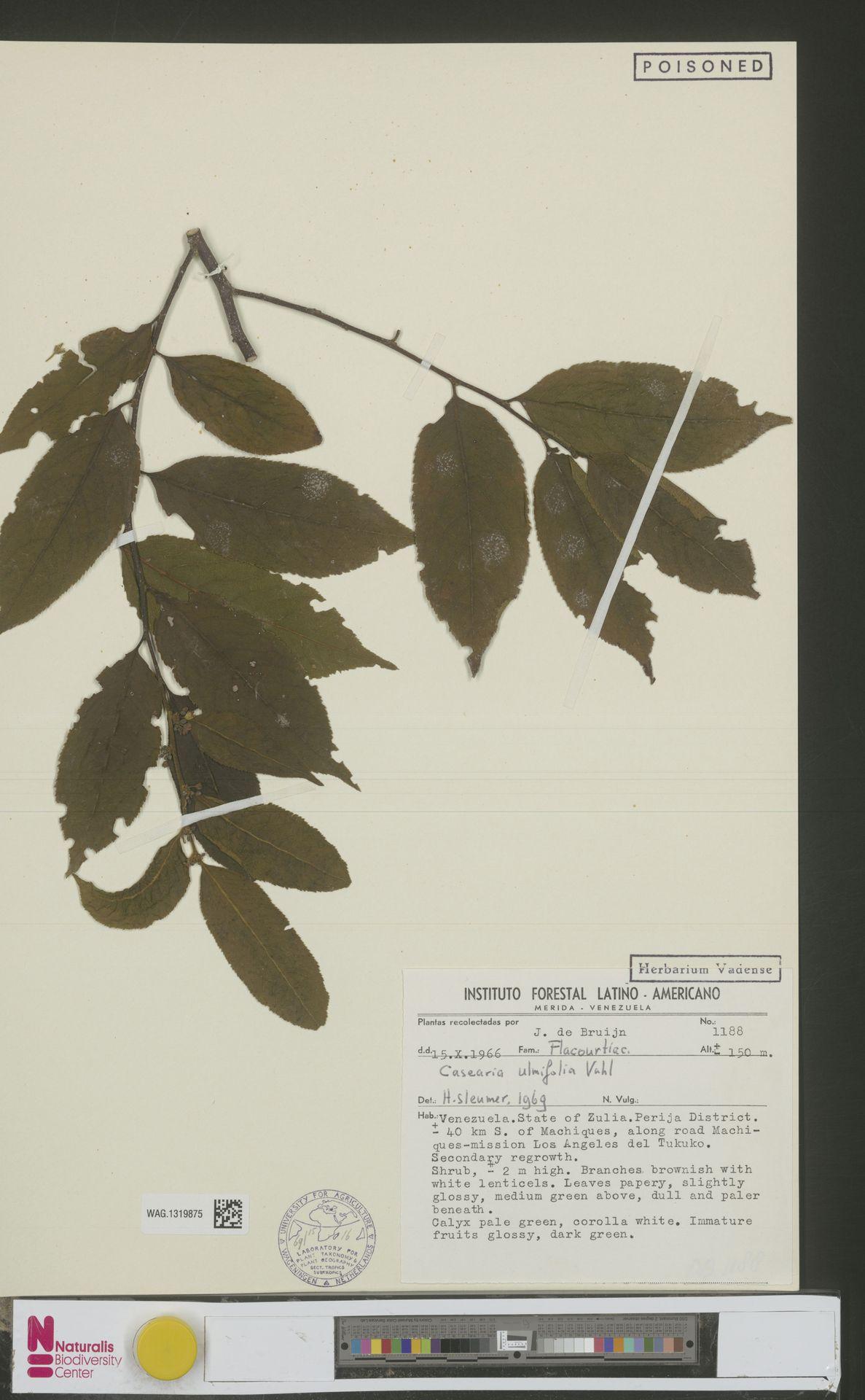 WAG.1319875 | Casearia ulmifolia Vahl ex Vent.