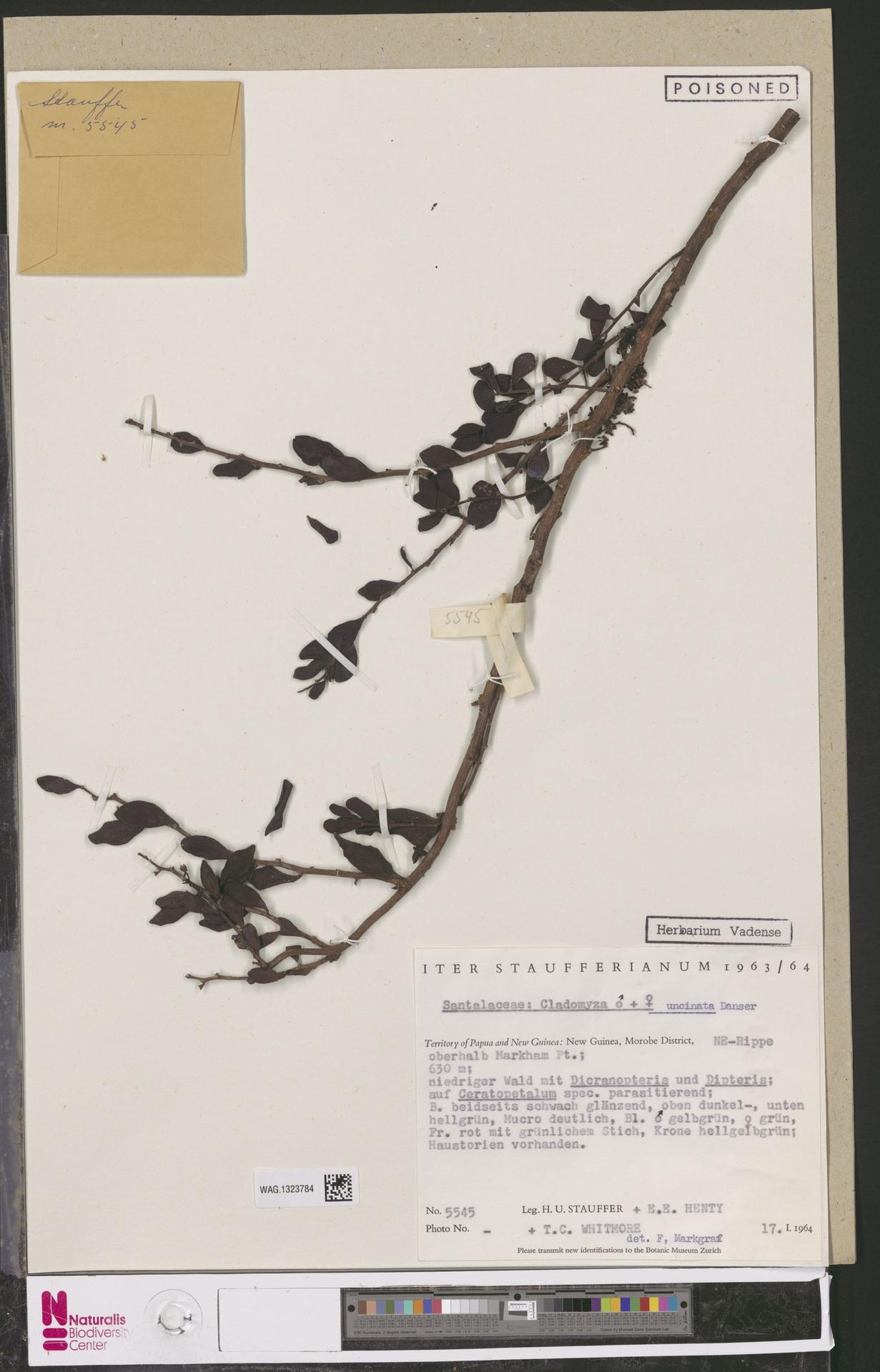 WAG.1323784 | Cladomyza uncinata Danser