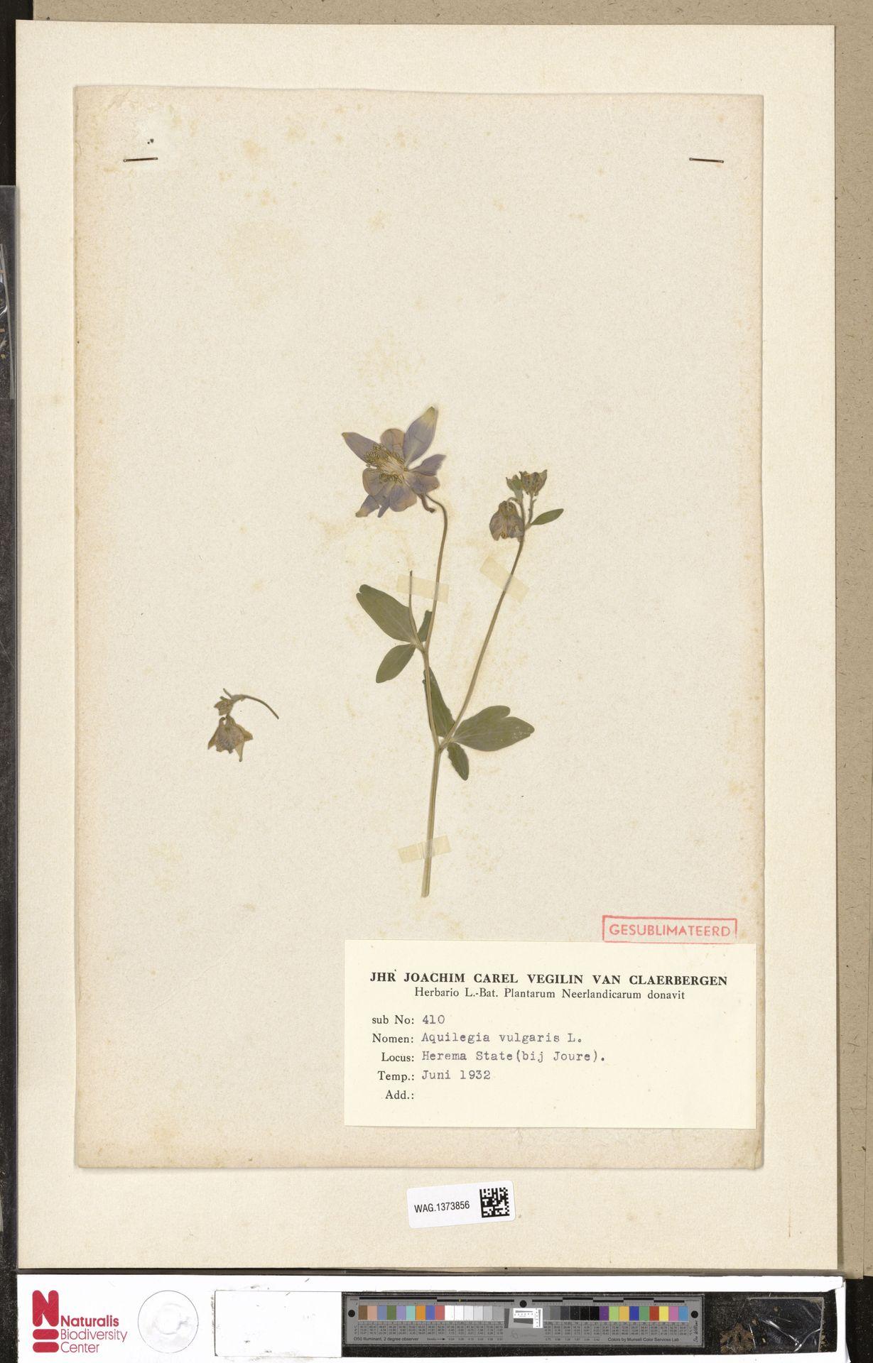 WAG.1373856 | Aquilegia vulgaris L.