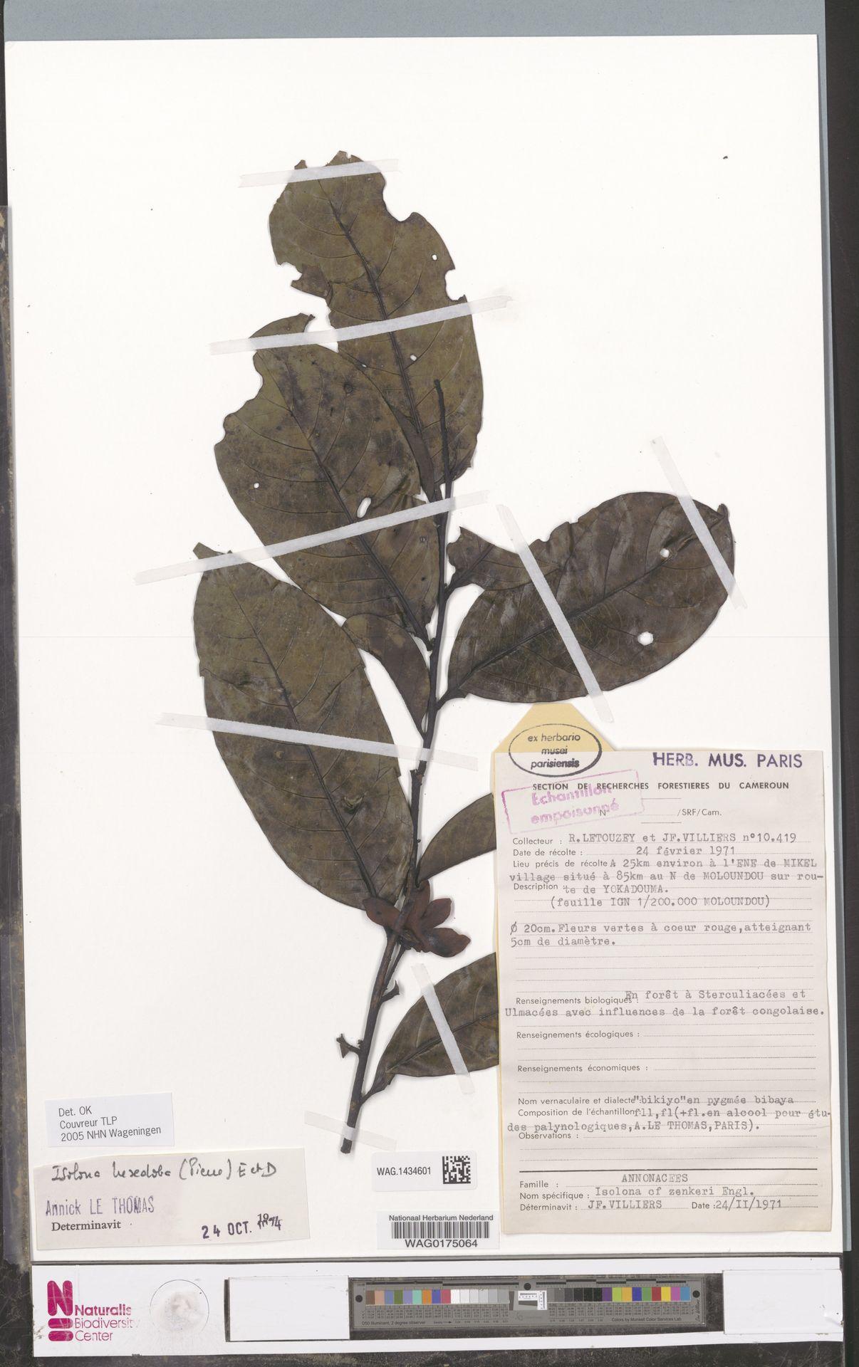 WAG.1434601   Isolona hexaloba (Pierre) Engl.