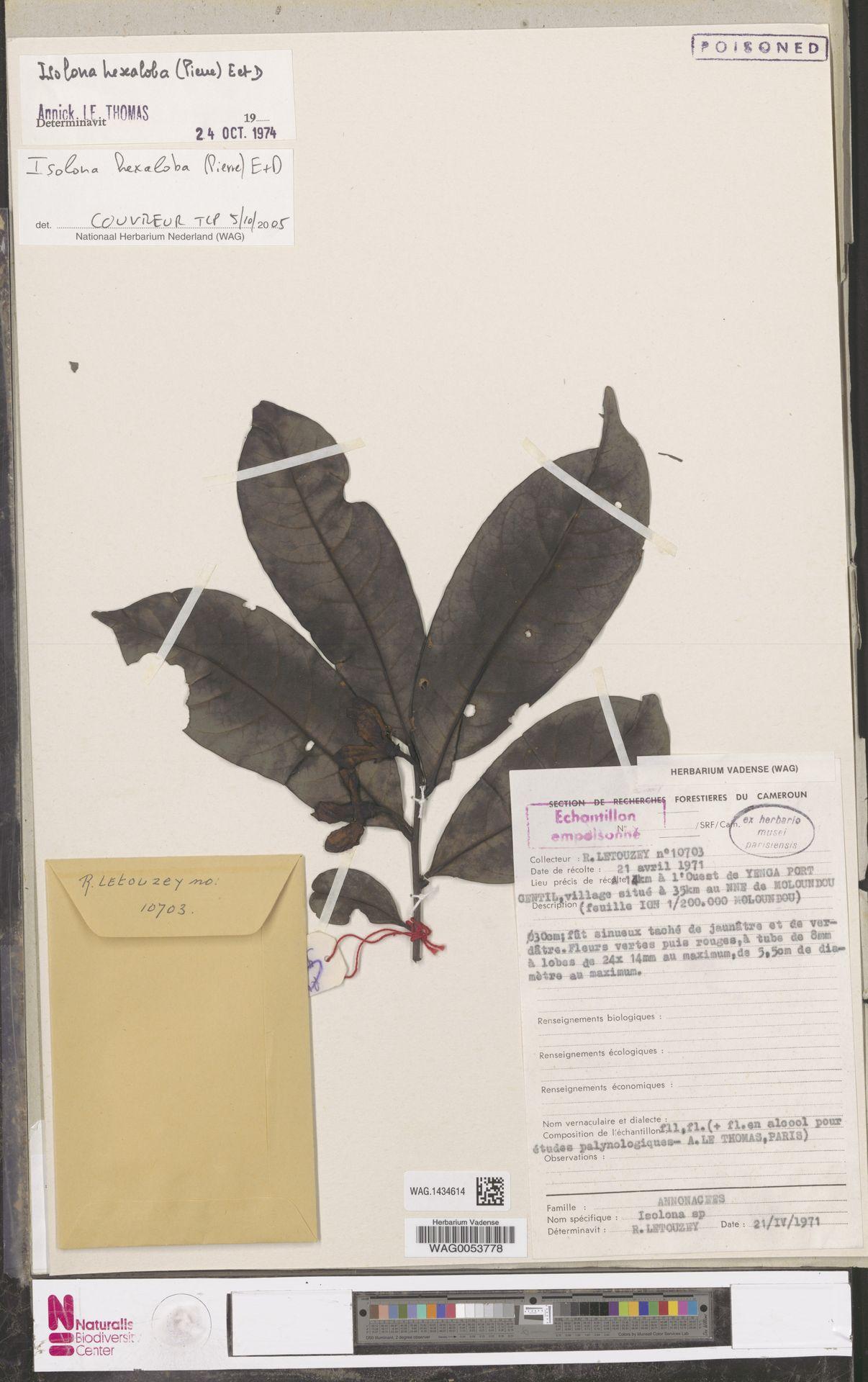 WAG.1434614 | Isolona hexaloba (Pierre) Engl.
