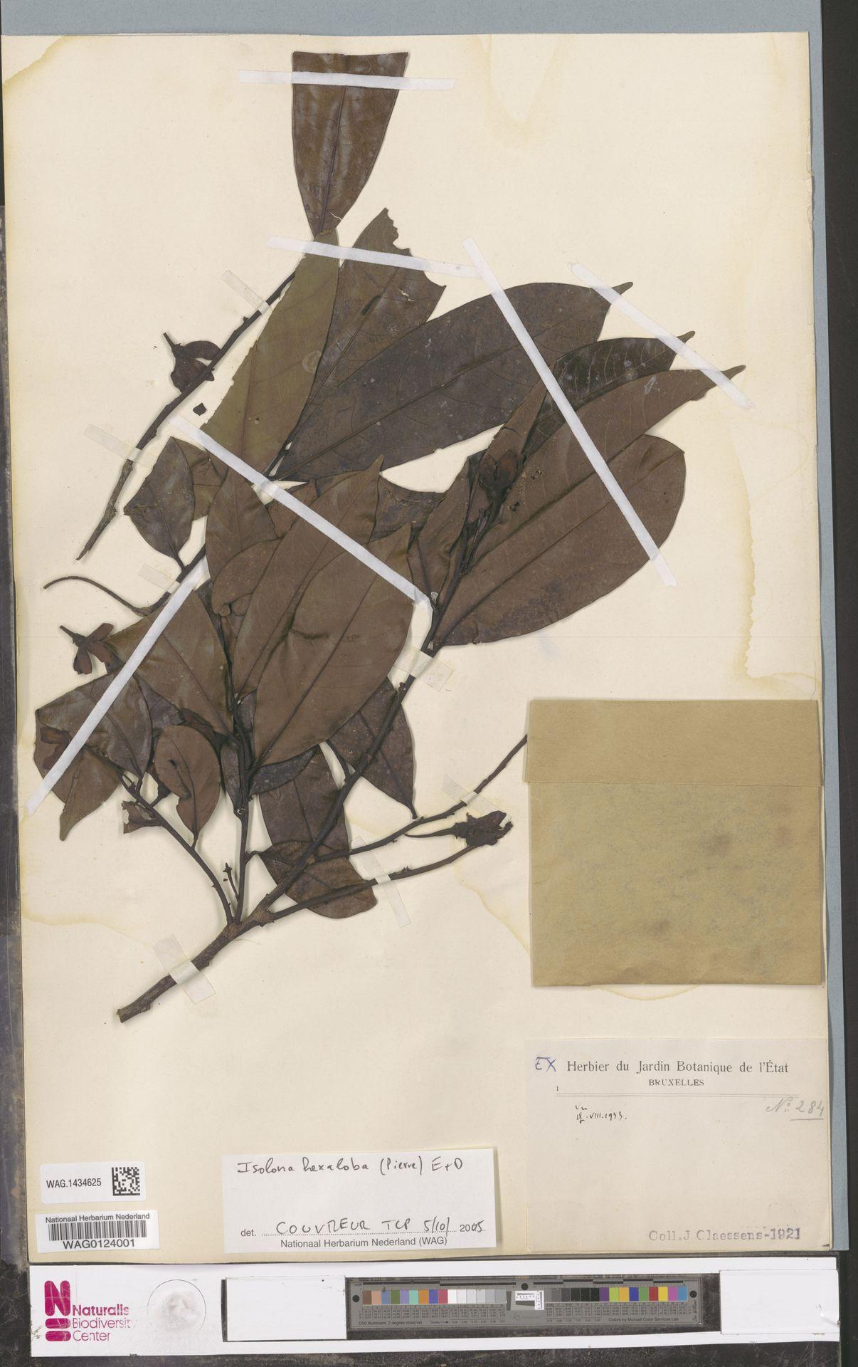 WAG.1434625 | Isolona hexaloba (Pierre) Engl.