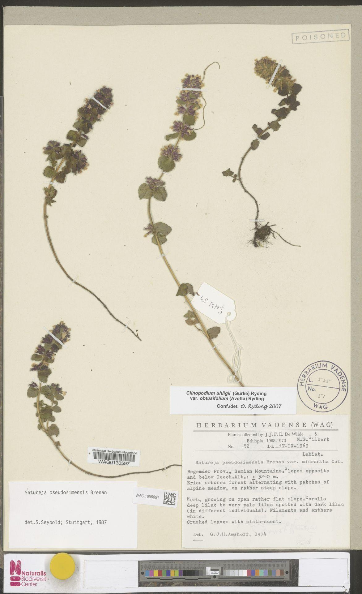 WAG.1656091 | Clinopodium uhligii var. obtusifolium (Avetta) Ryding